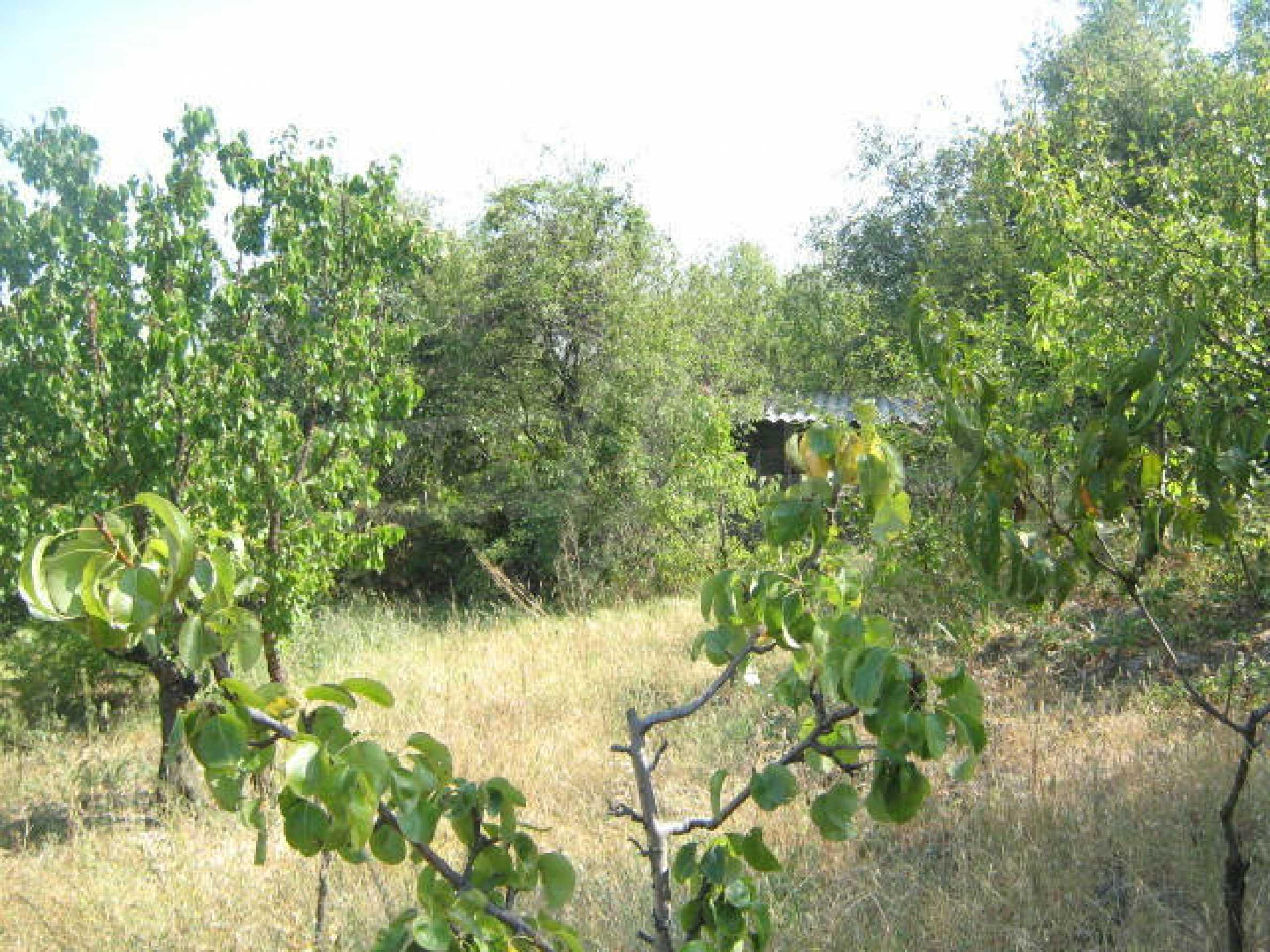 Grundstück in der Nähe von Vidin 1