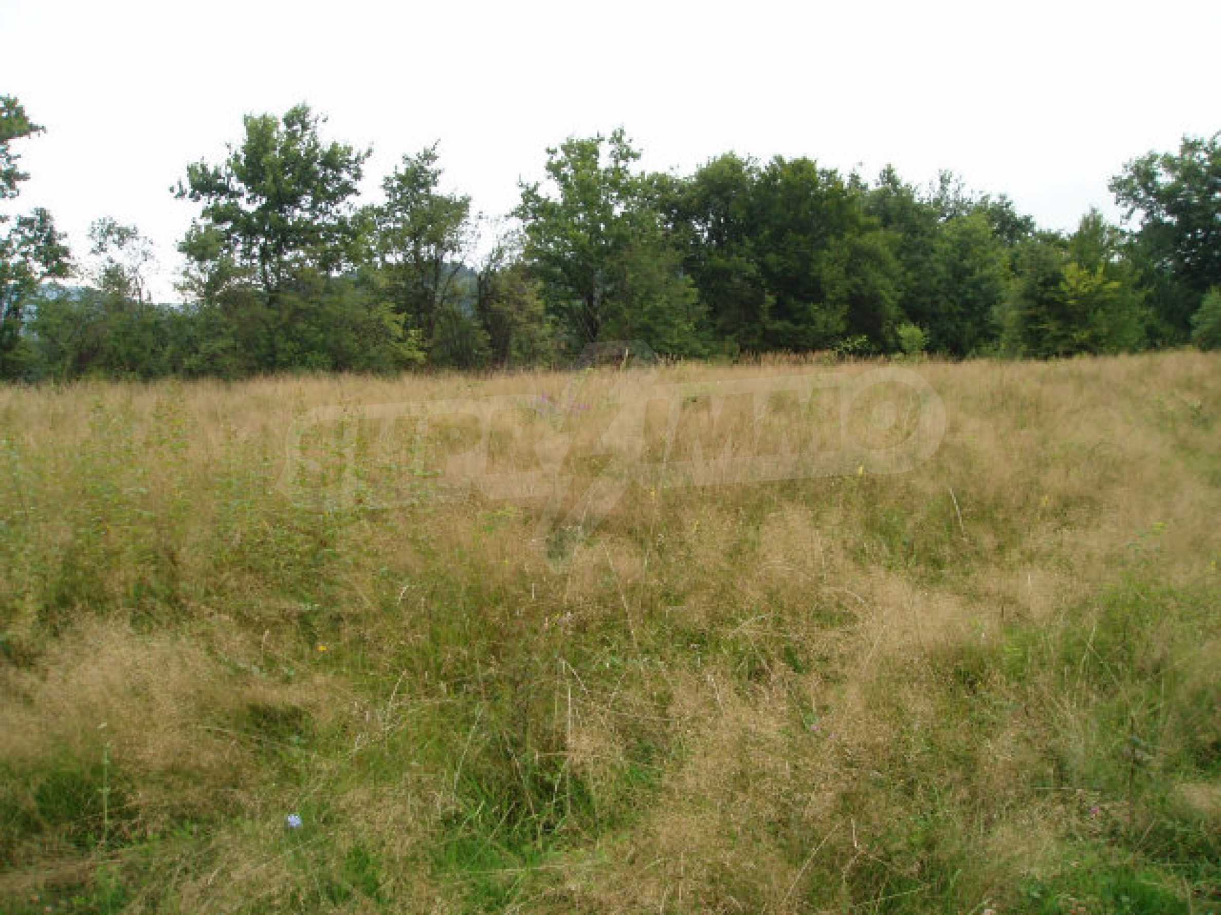 Big plots of land with great potential 1
