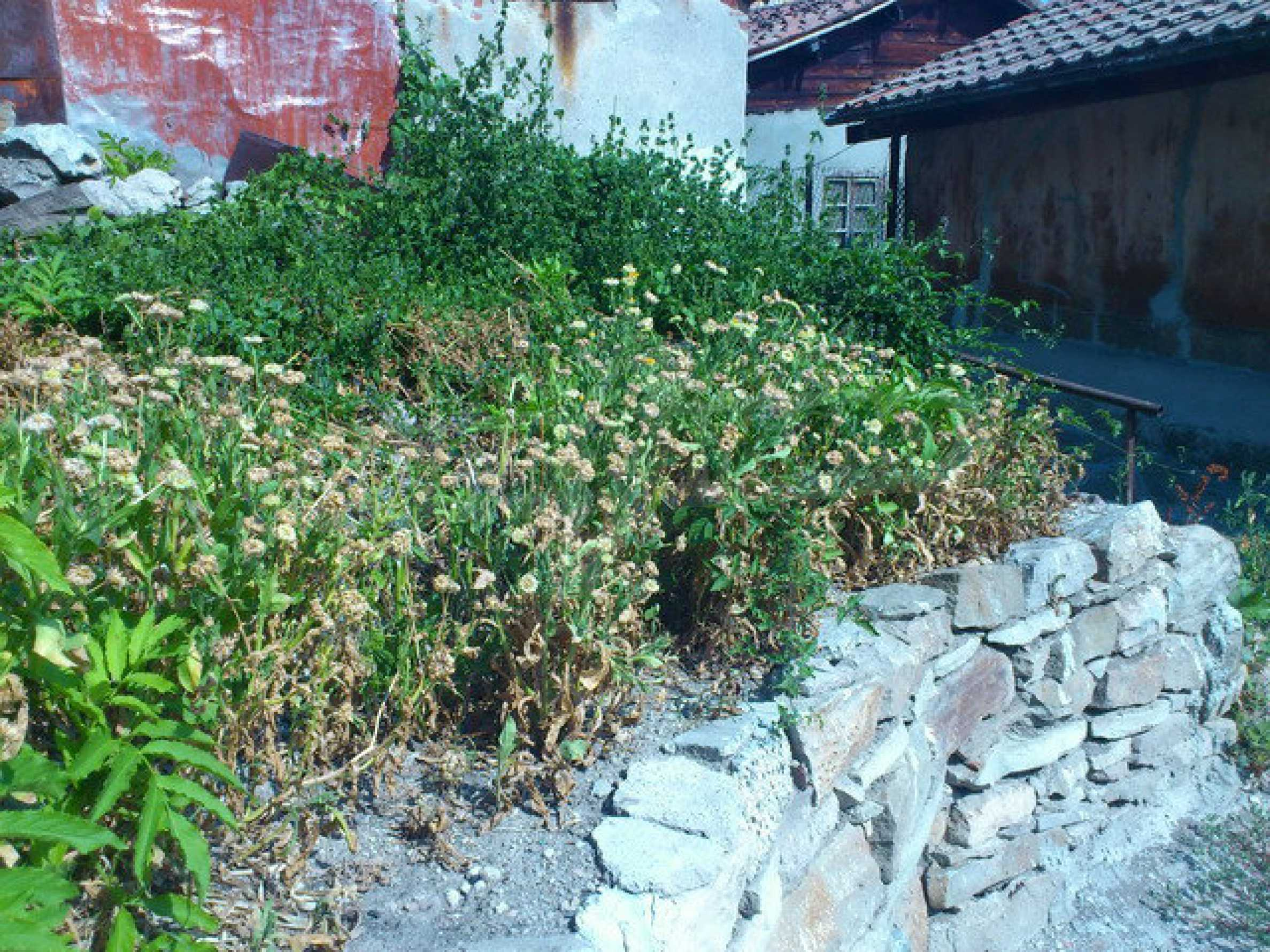 Regulated land in the old part of Veliko Tarnovo 1