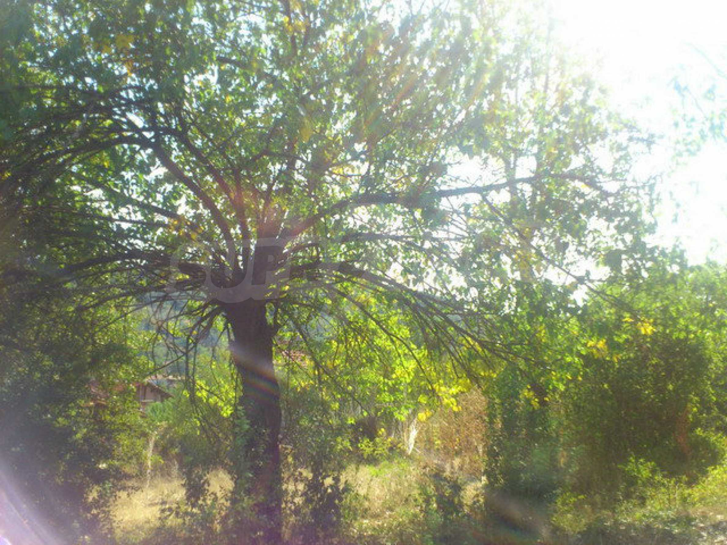 Plot of land in a village 30 km. from Veliko Tarnovo 9