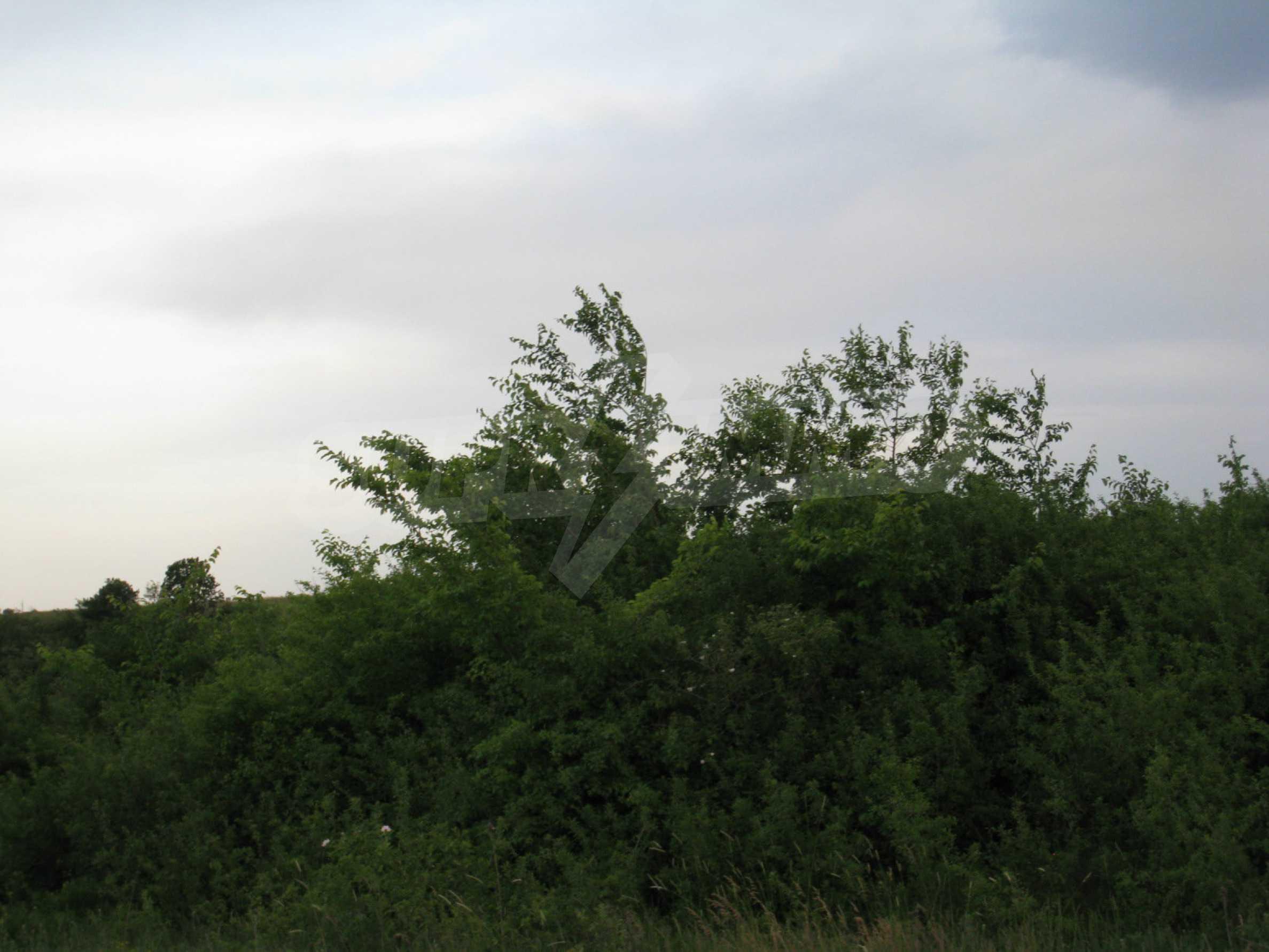 Ackerland in der Nähe eines Sees in Suhodol 21