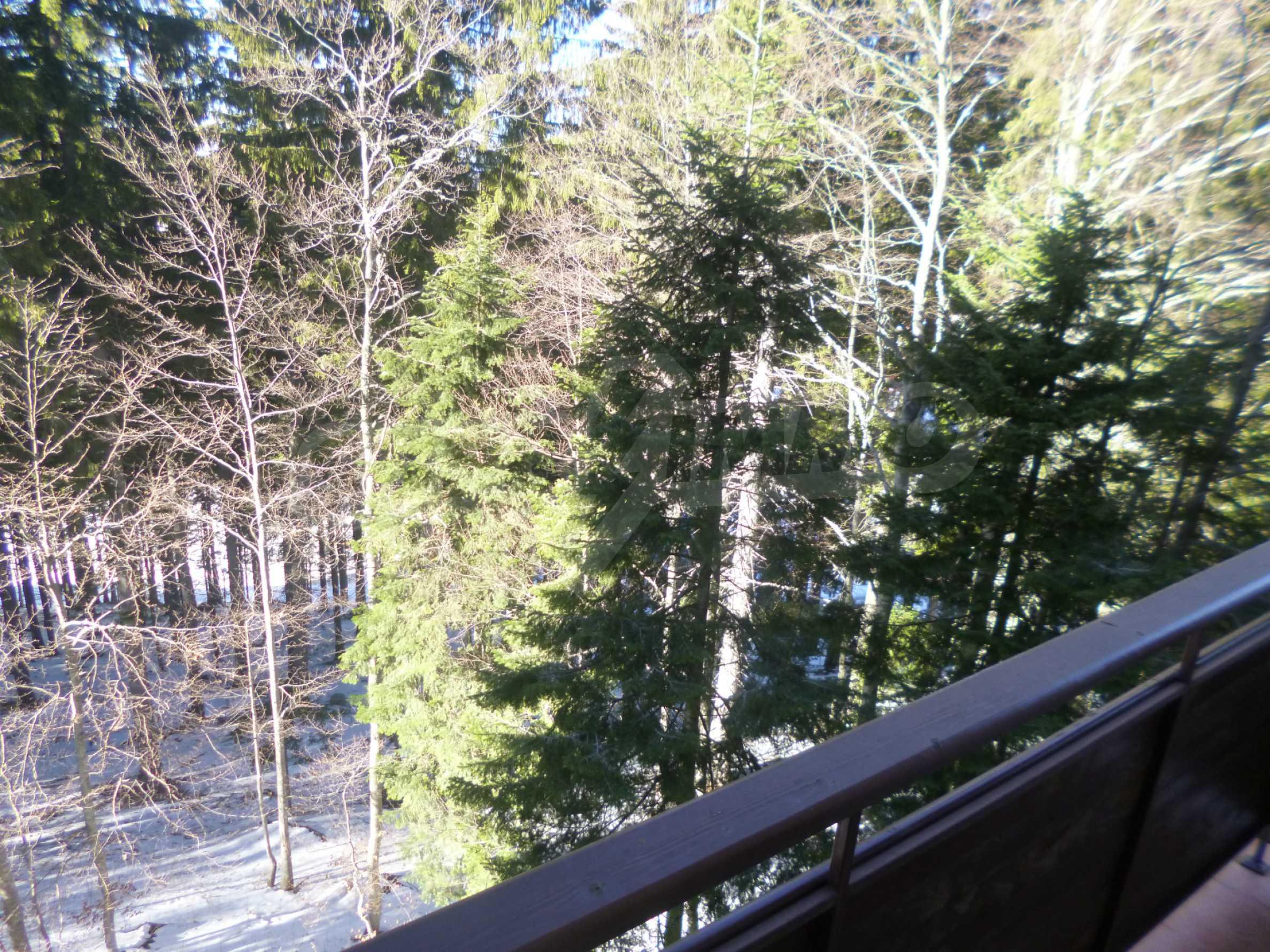 Cozy apartment near the ski slopes of Pamporovo 5