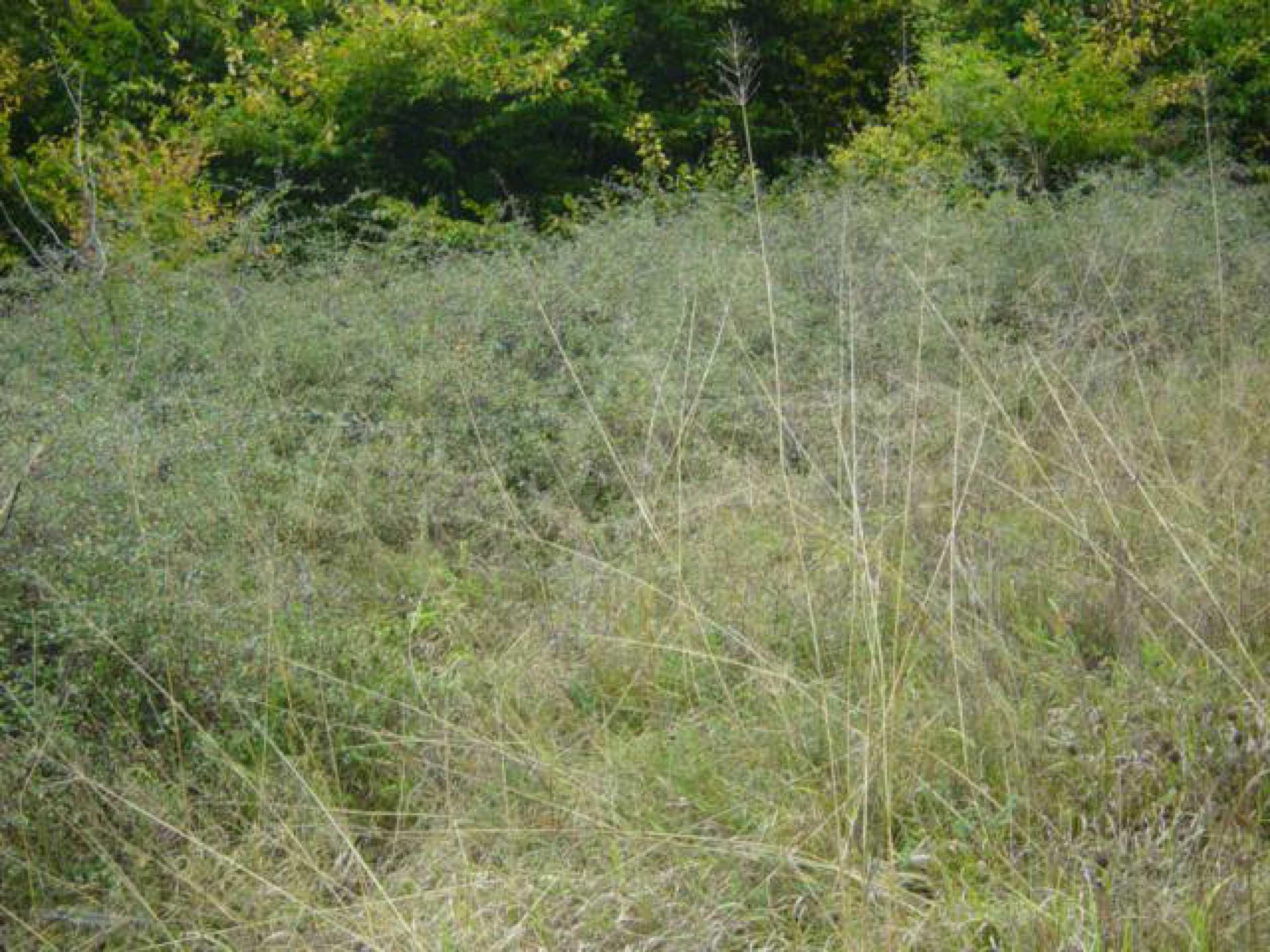 Ackerland inmitten der wunderschönen Natur des Teteven Balkan 5