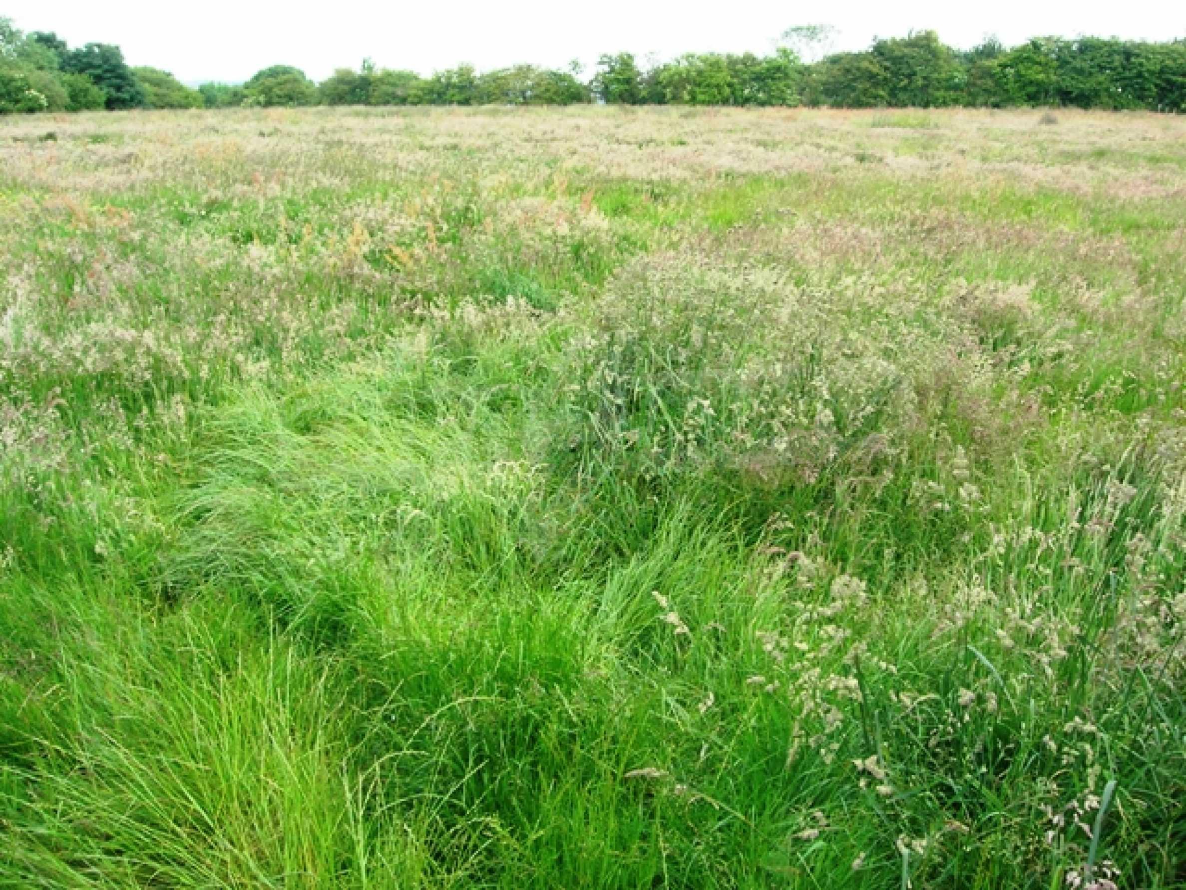 Земельный участок вблизи г. Варна 3