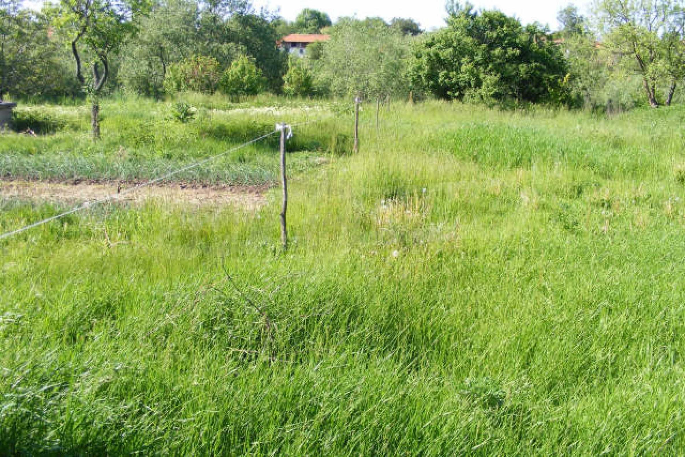 Земельный участок вблизи г. Монтана