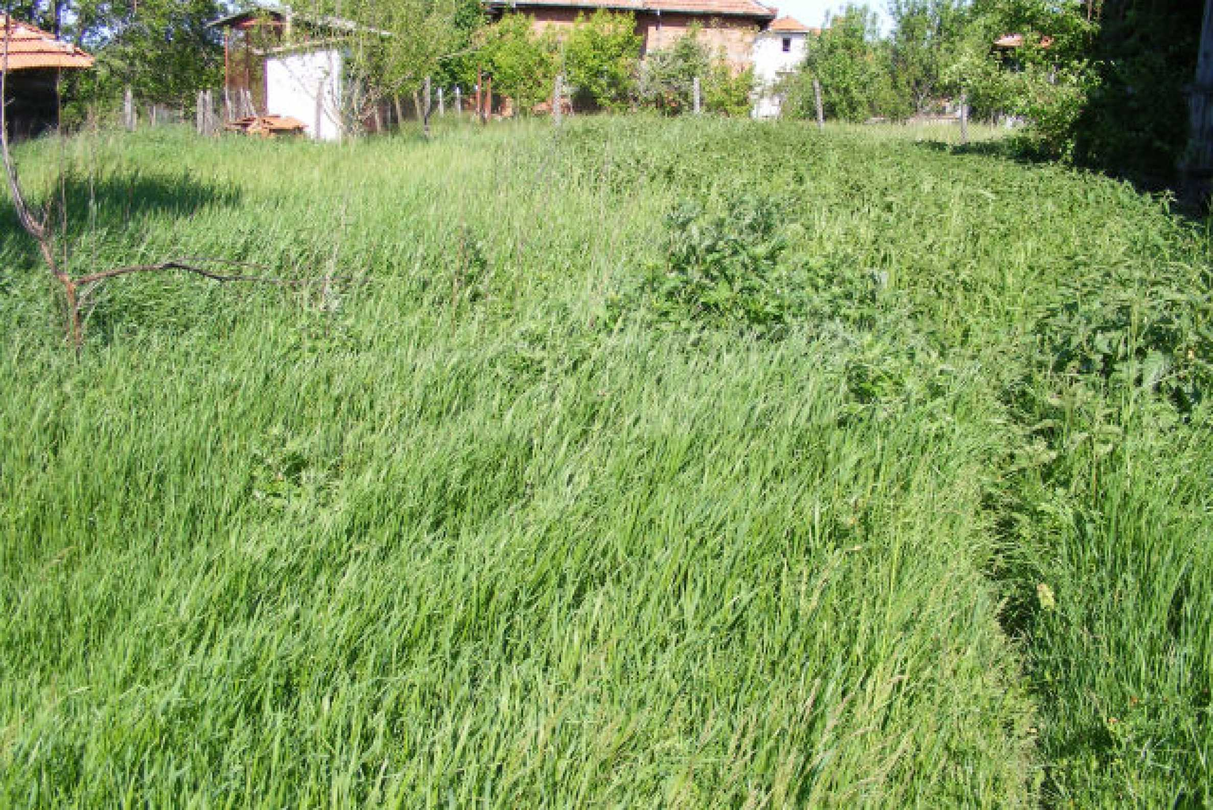 Земельный участок вблизи г. Монтана 2
