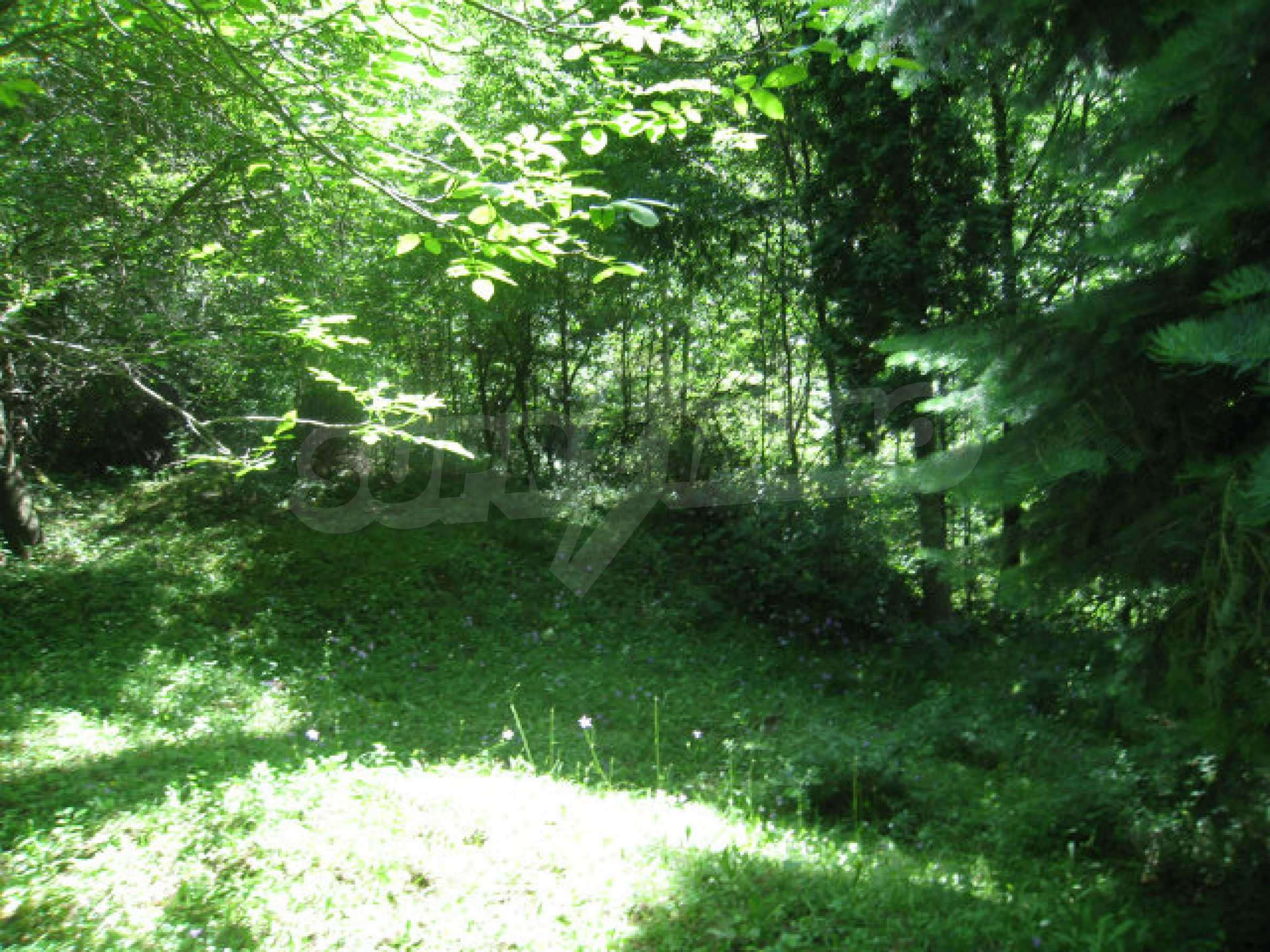 Development land in village 48 km from Svoge 8