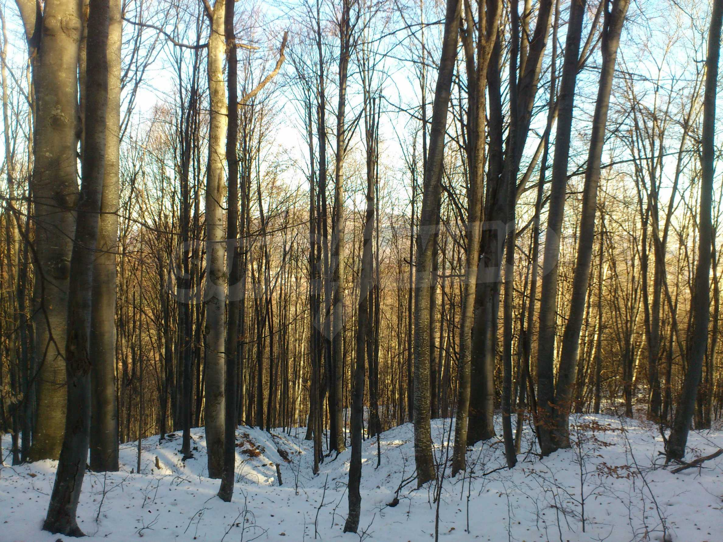 Deciduous forest near Aprilci
