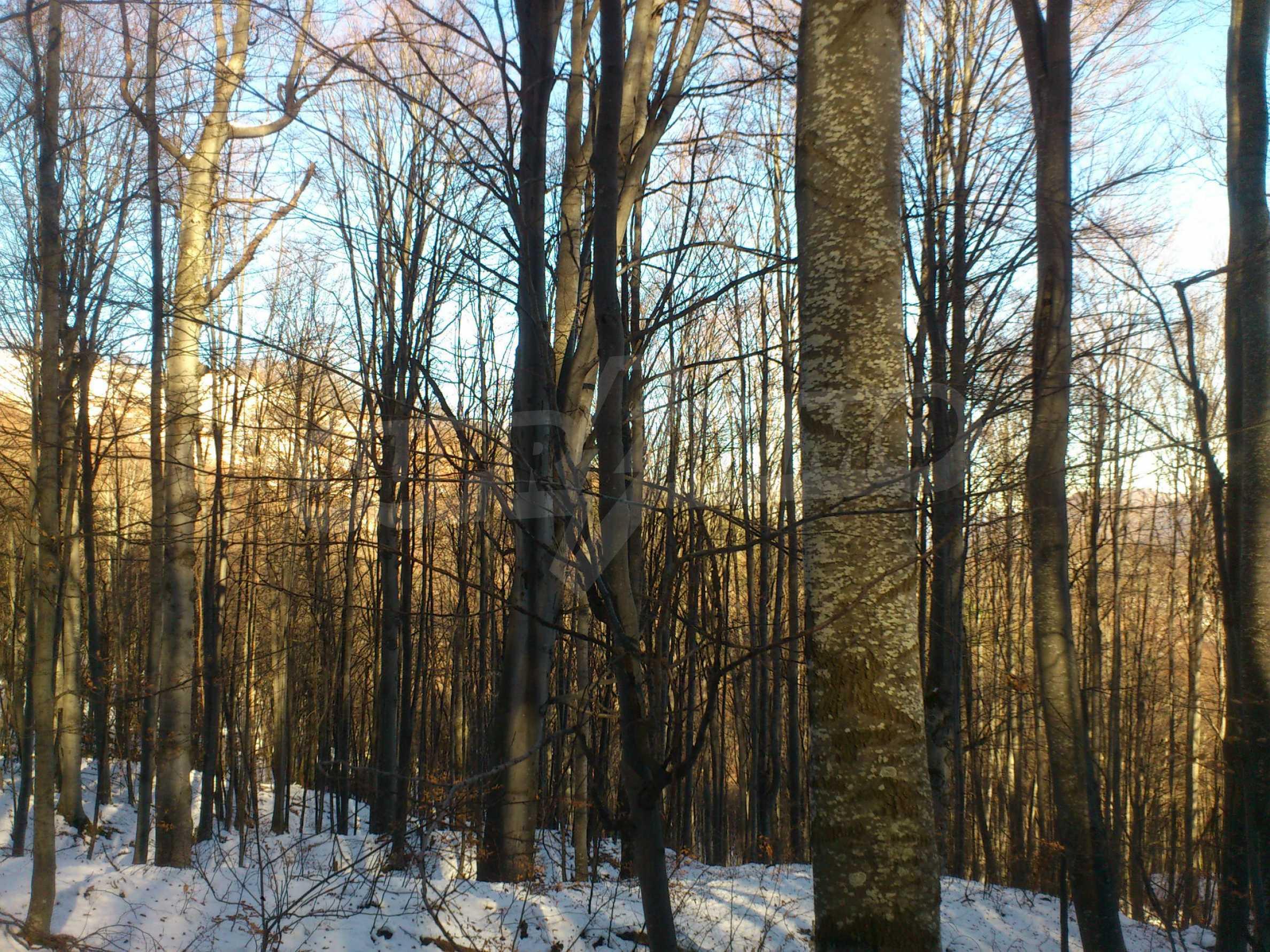 160-летний лес в уникальном месте! 12