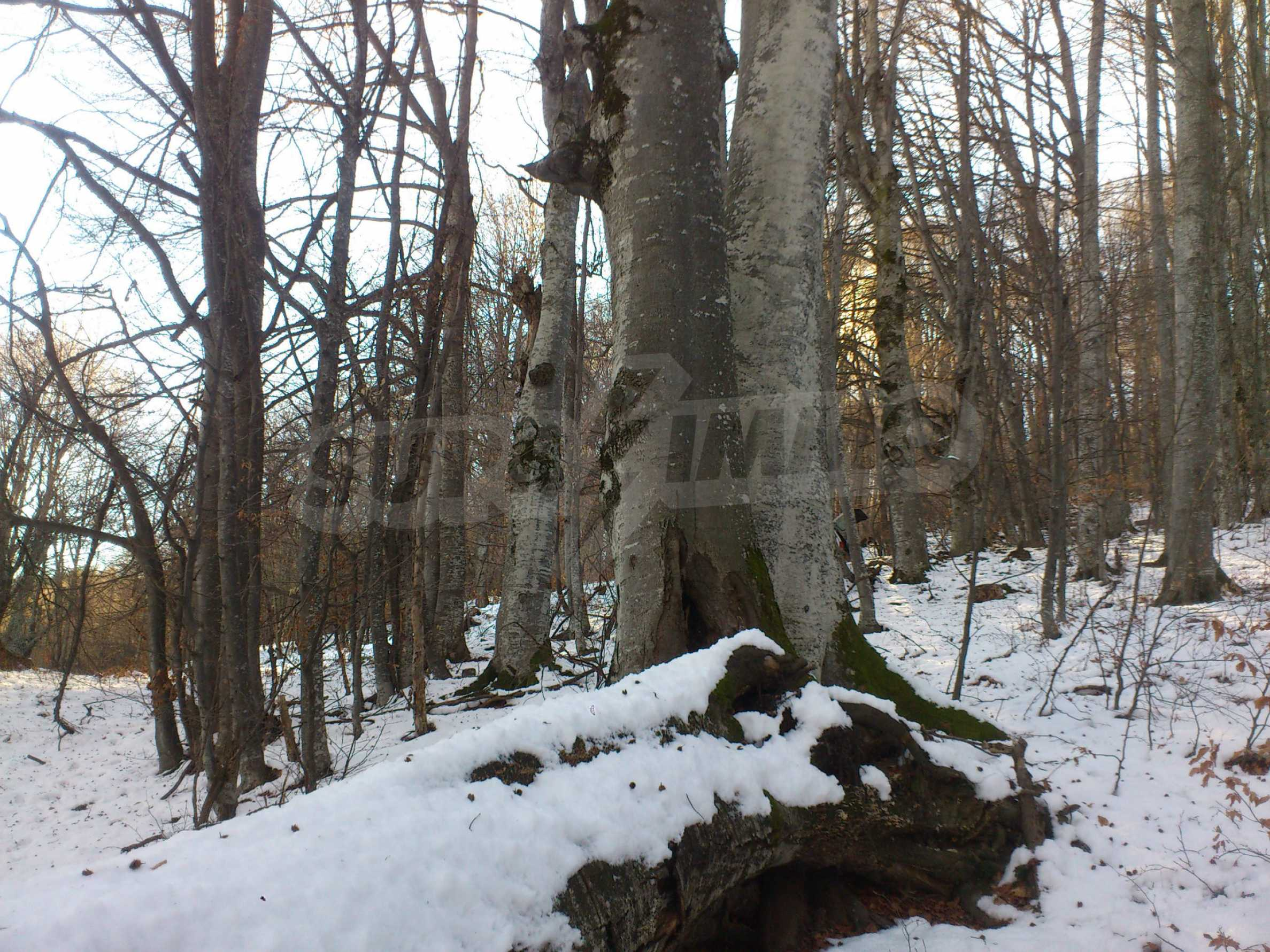 Deciduous forest near Aprilci 17