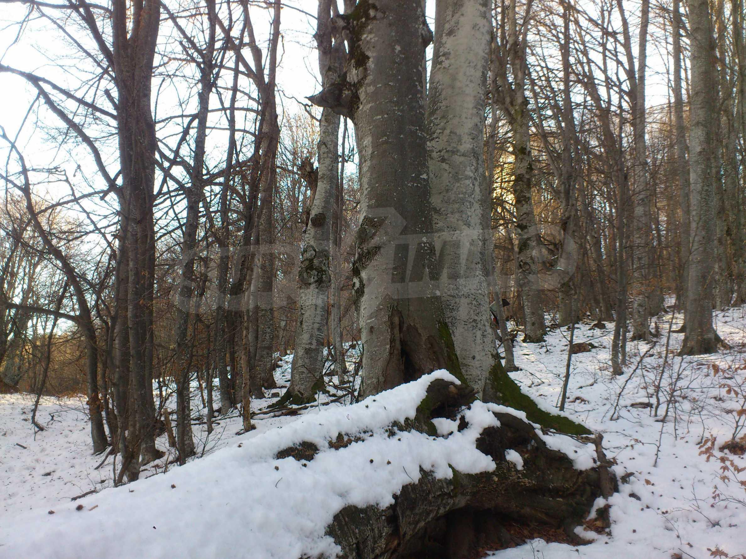 160-летний лес в уникальном месте! 17