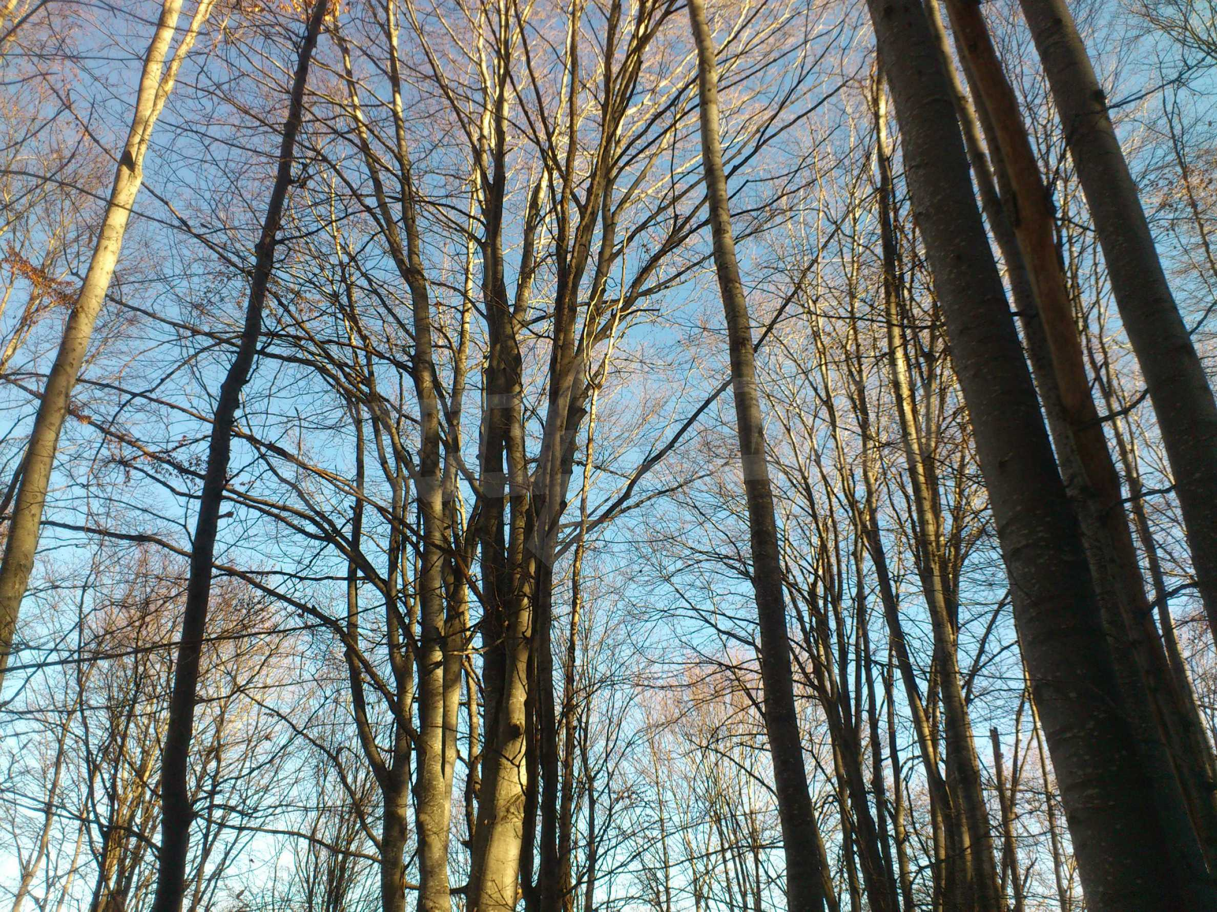 160-летний лес в уникальном месте! 6