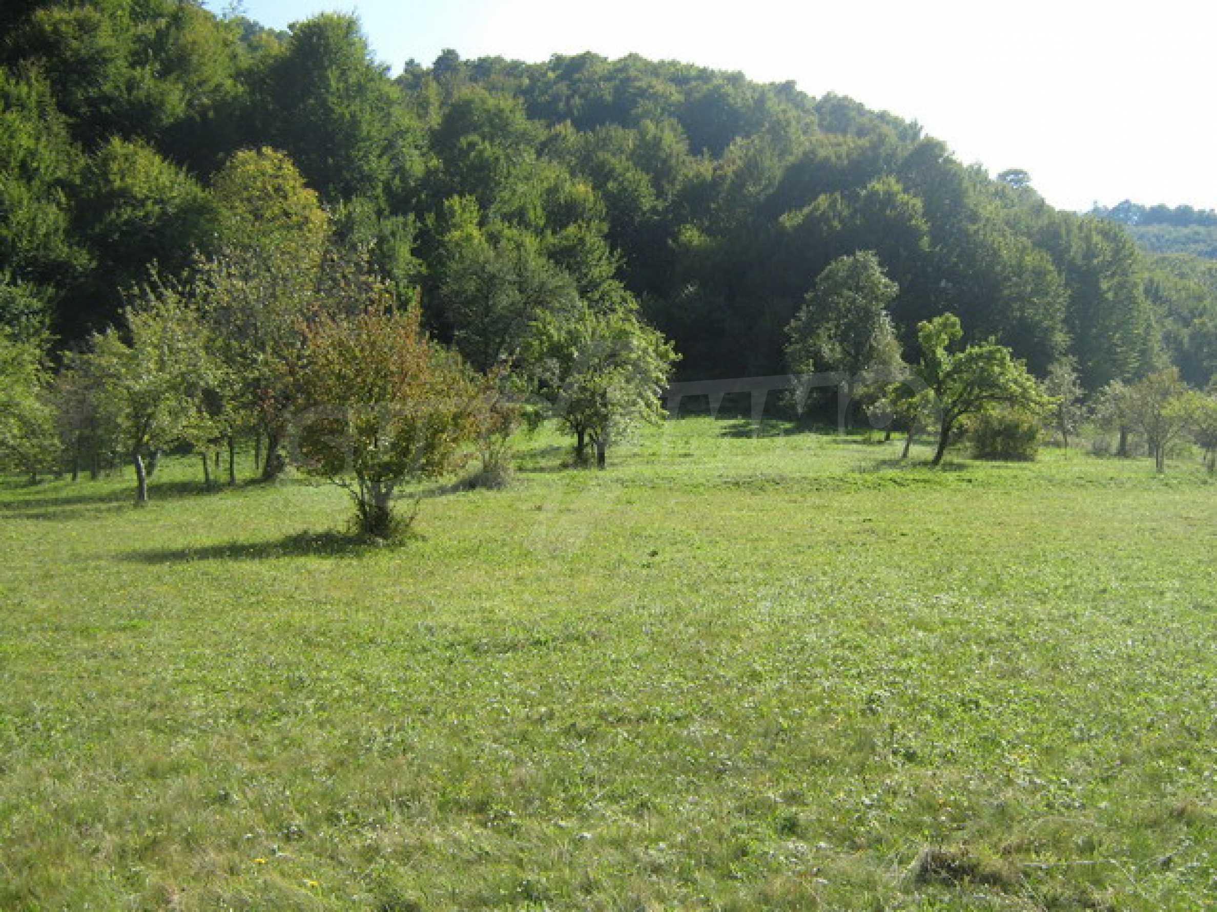 Large plot of land in Ribaritsa