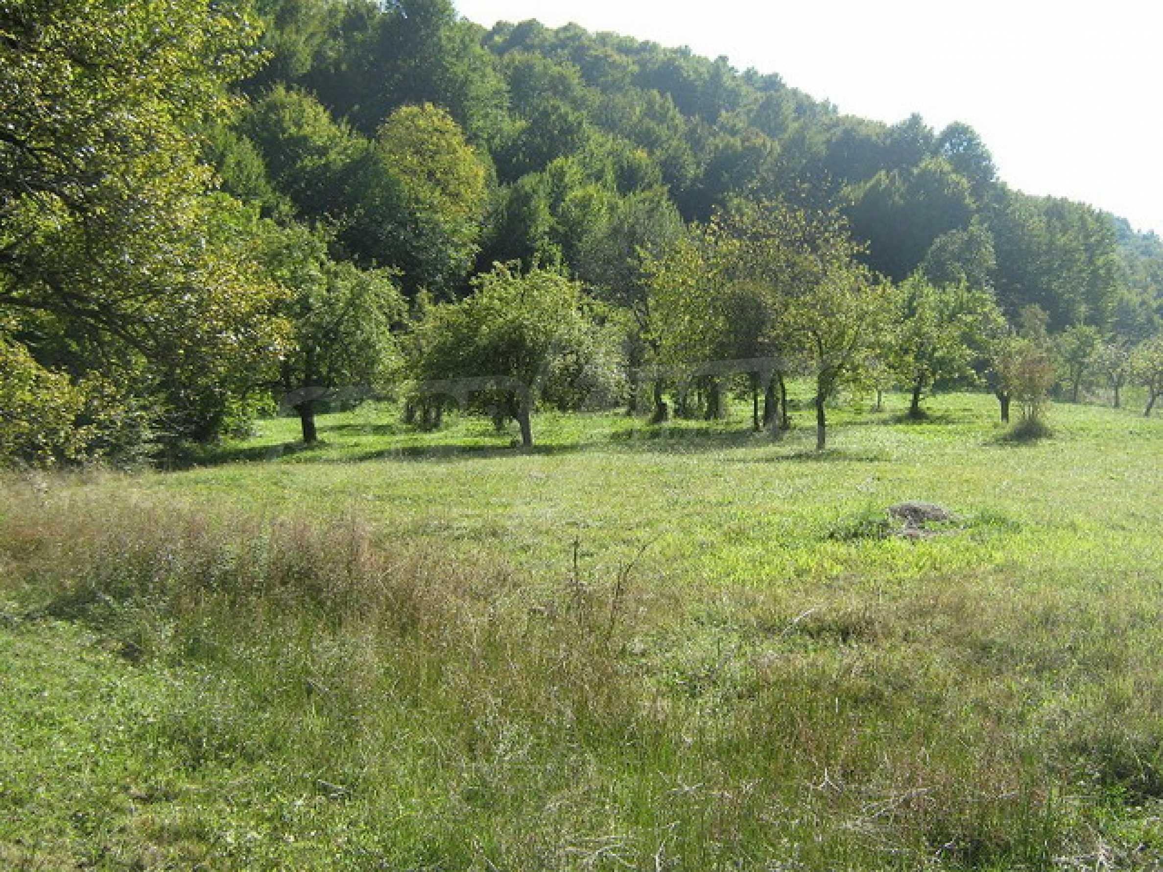 Large plot of land in Ribaritsa 1
