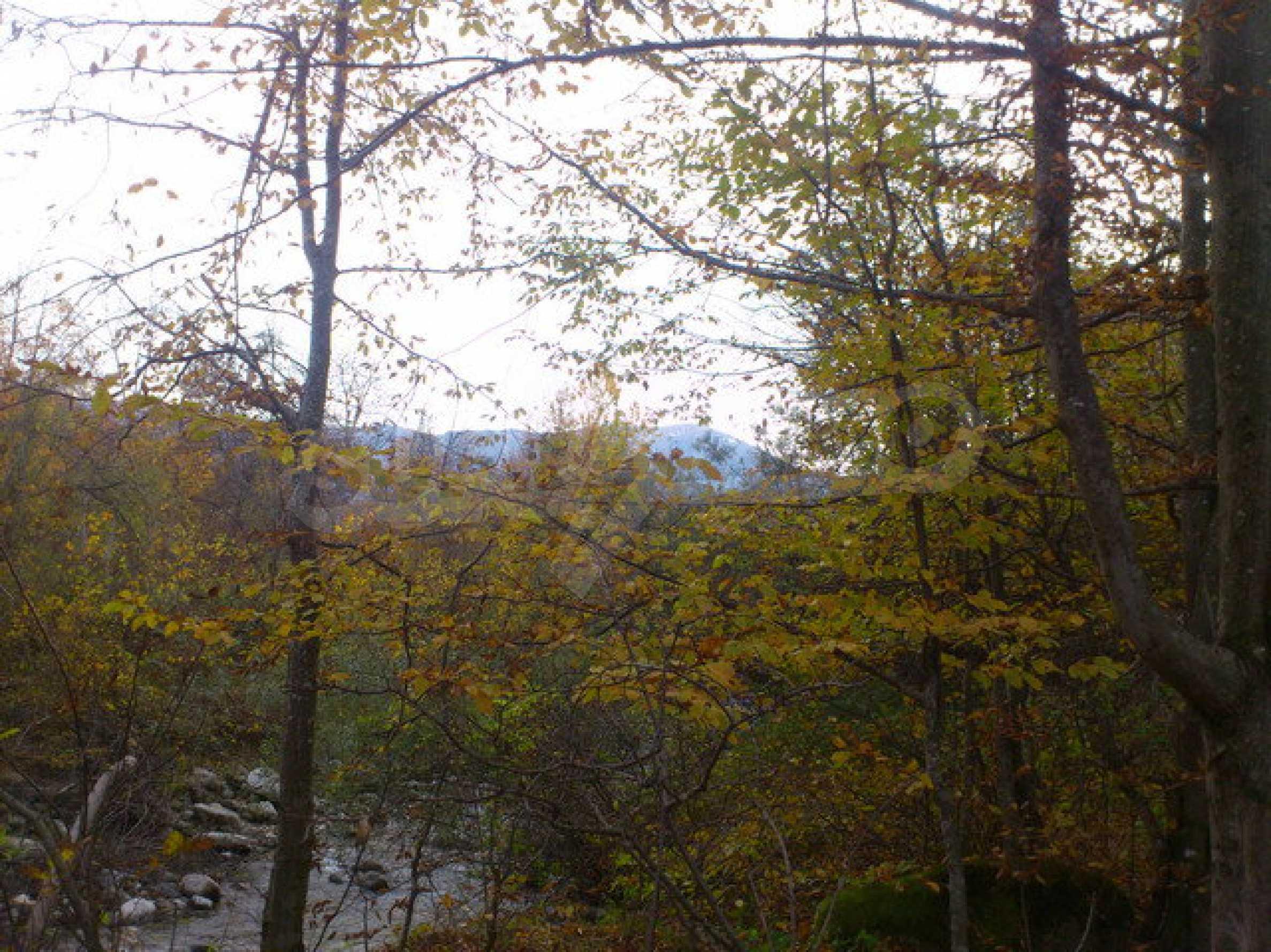 Земеделска земя и гора  7