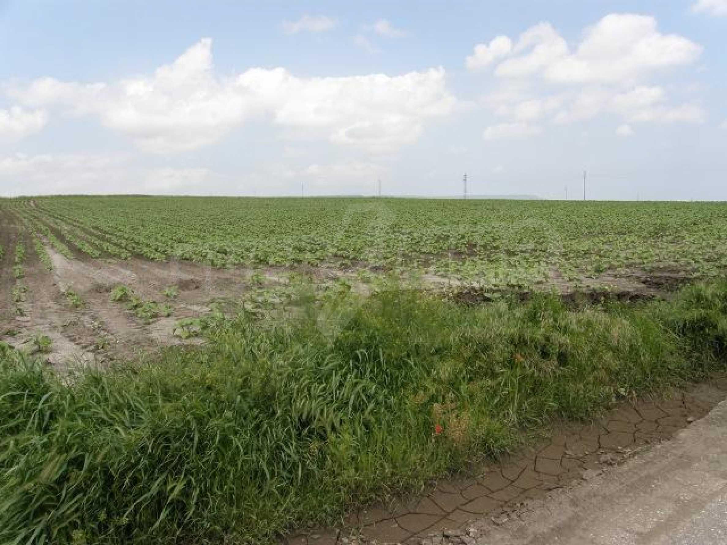 Продается участок земли в селе Тополи, район Варна
