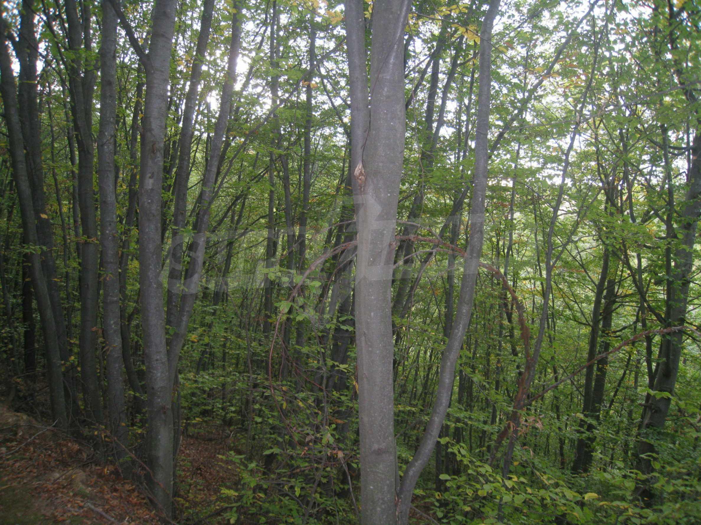 Wald zwischen den Städten Etropole und Pravets 12