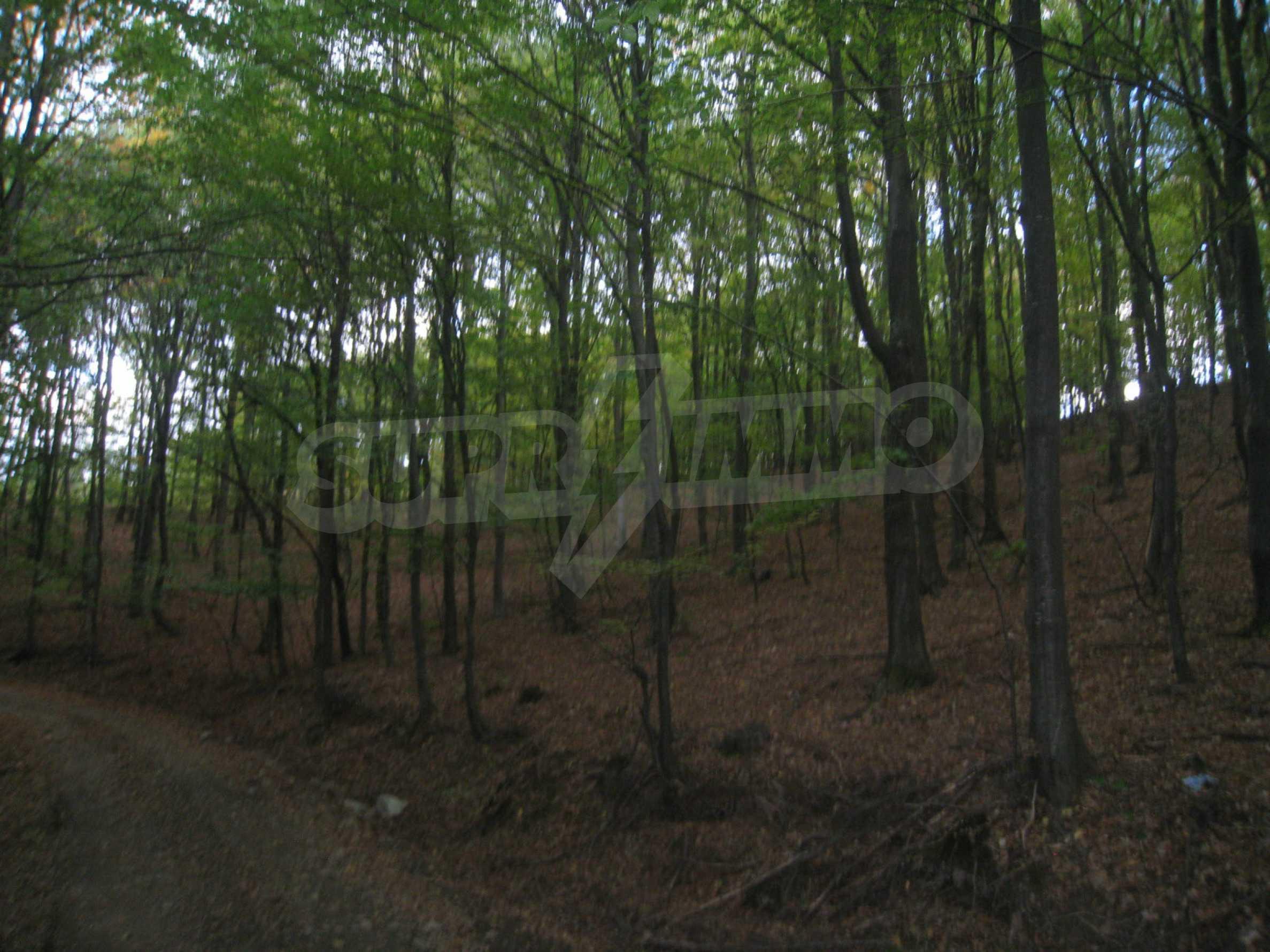Wald zwischen den Städten Etropole und Pravets 14