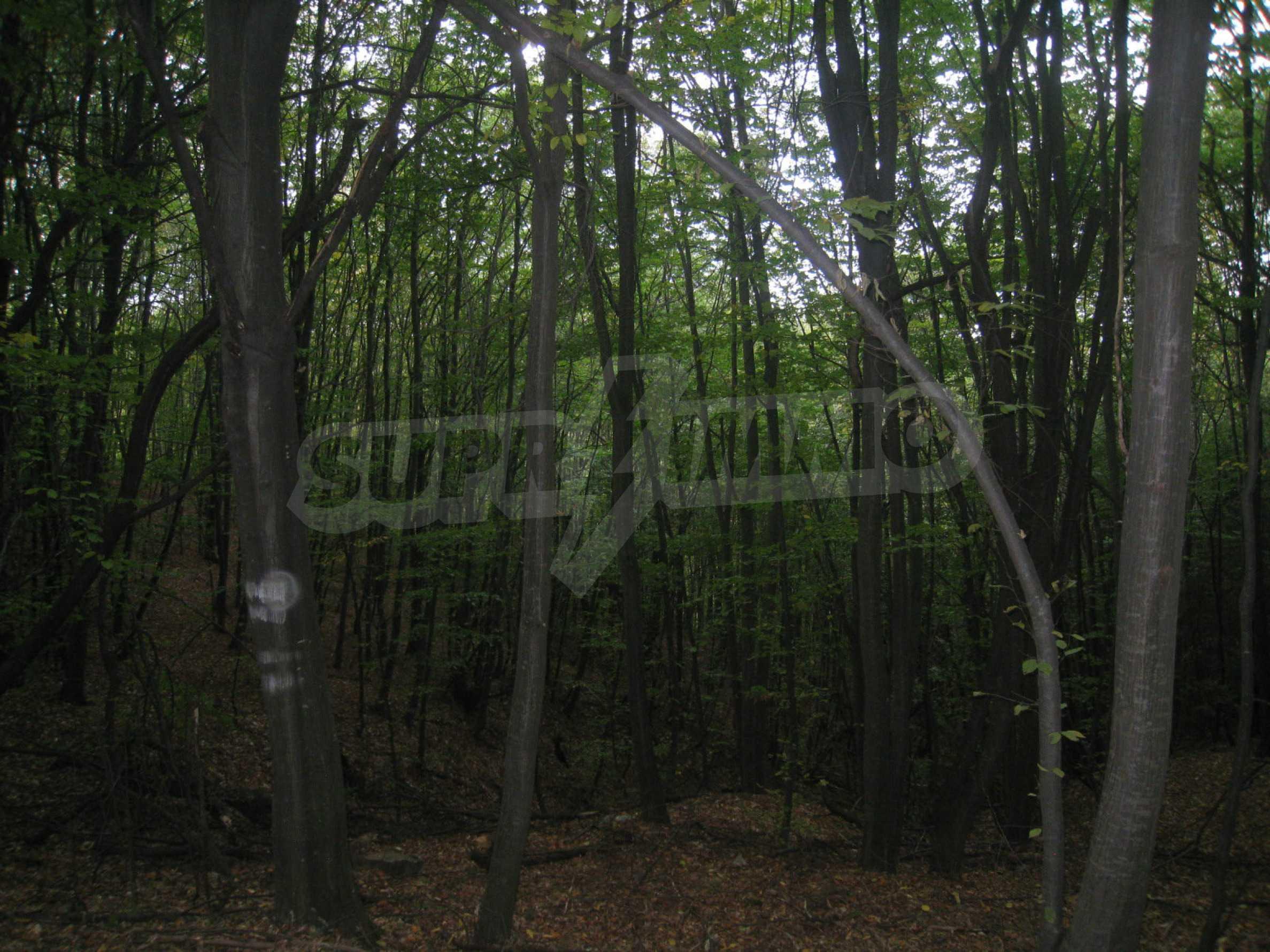 Wald zwischen den Städten Etropole und Pravets 17