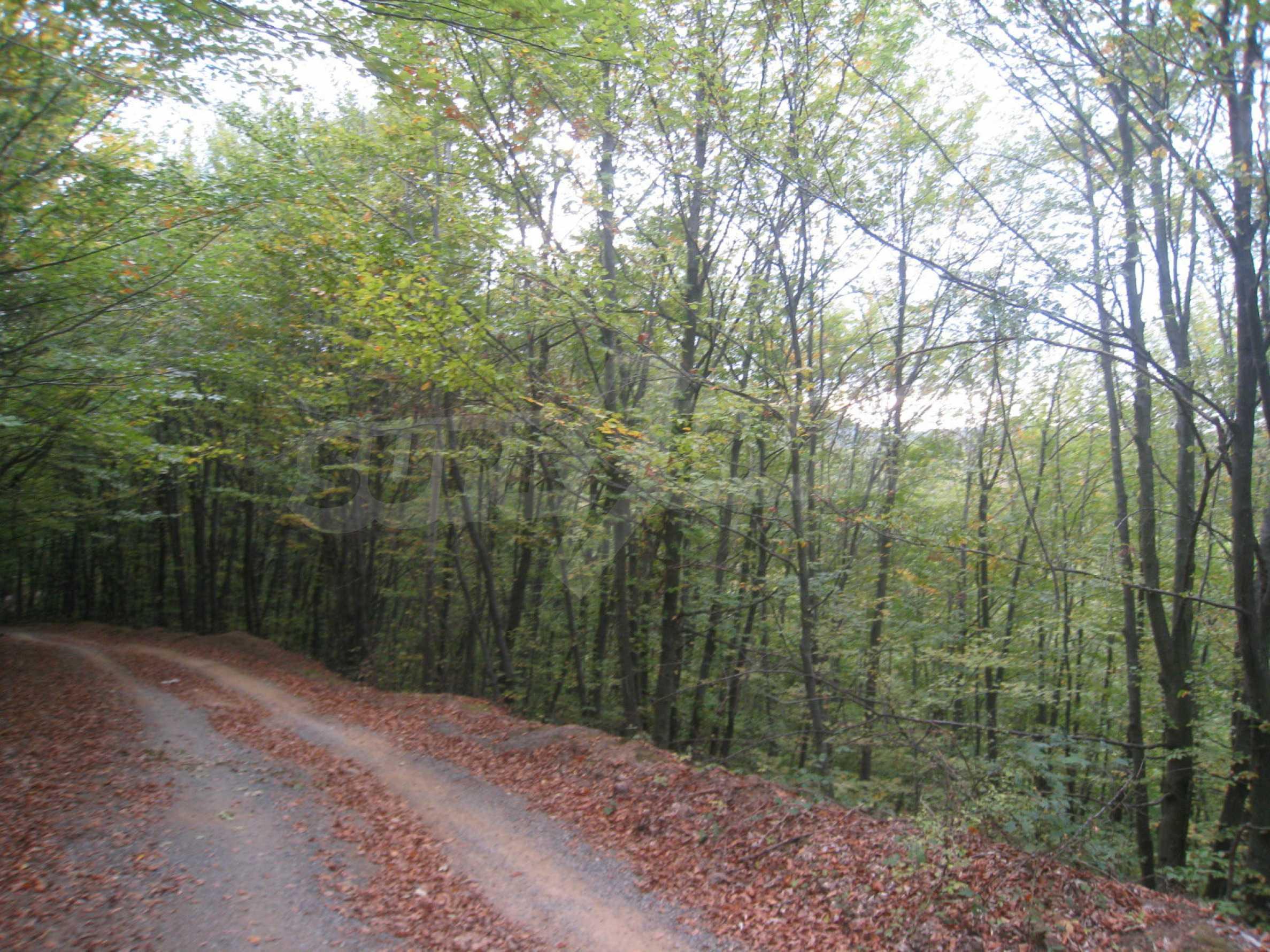 Wald zwischen den Städten Etropole und Pravets 19