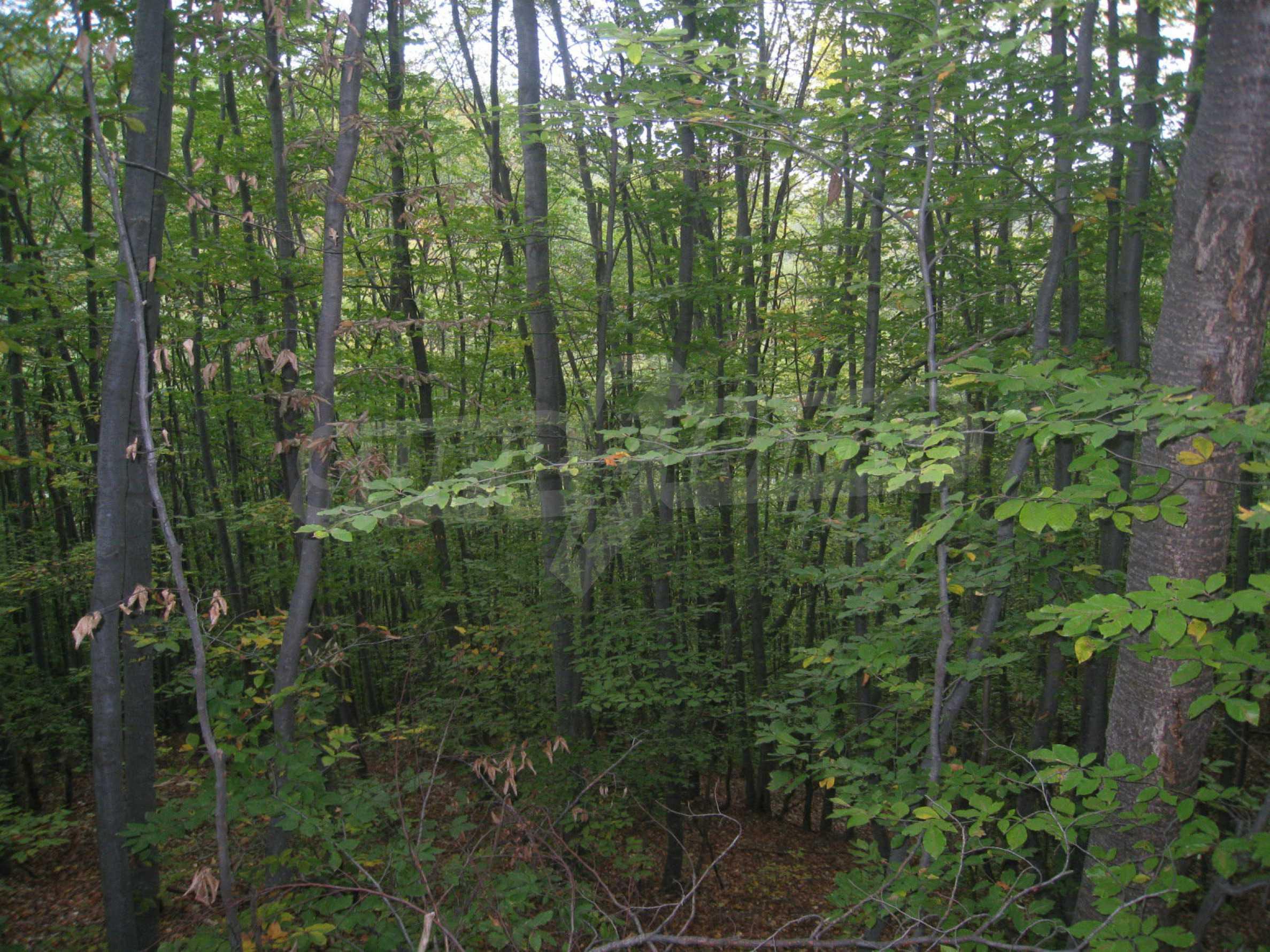 Wald zwischen den Städten Etropole und Pravets 20