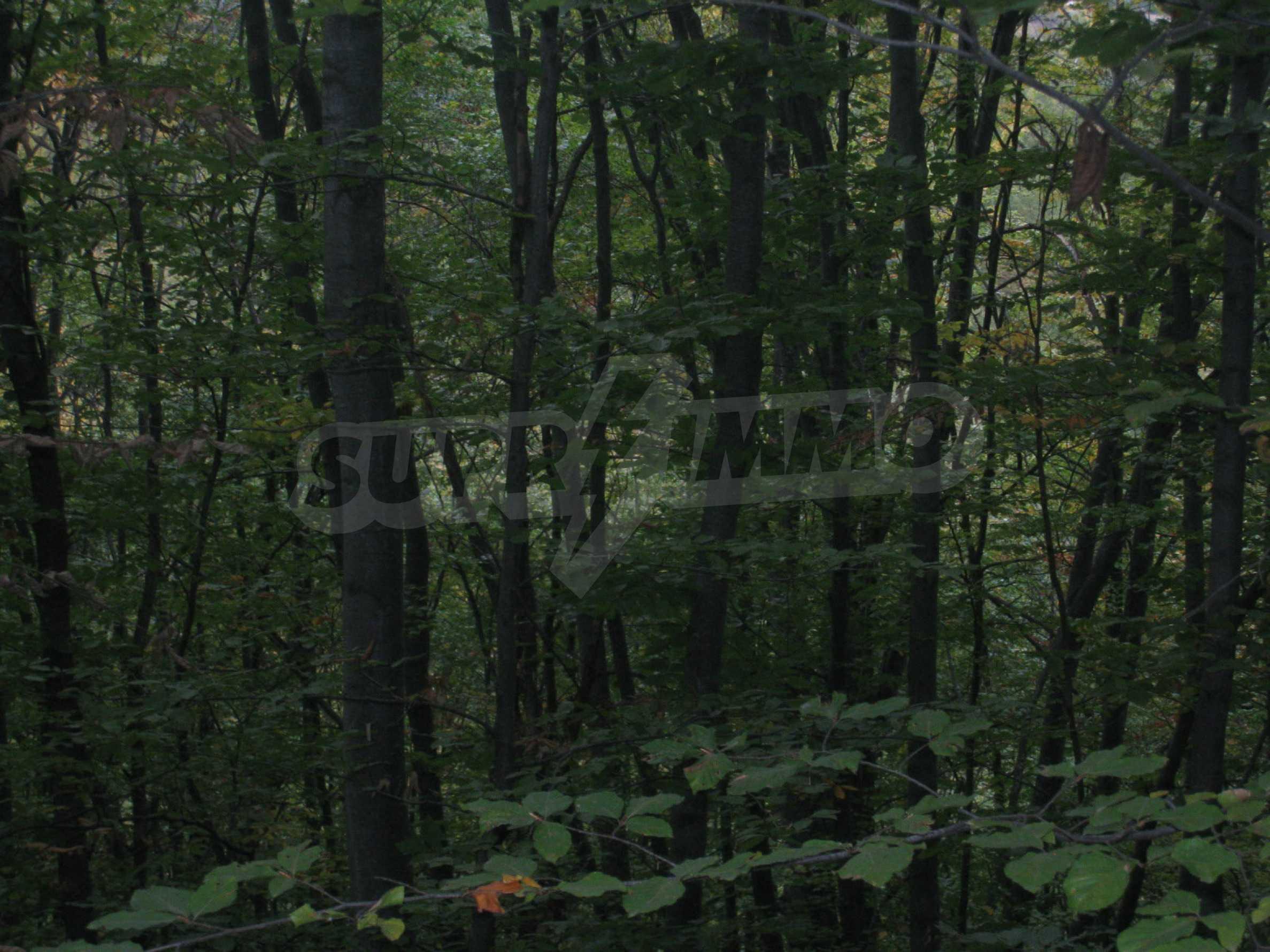 Wald zwischen den Städten Etropole und Pravets 21