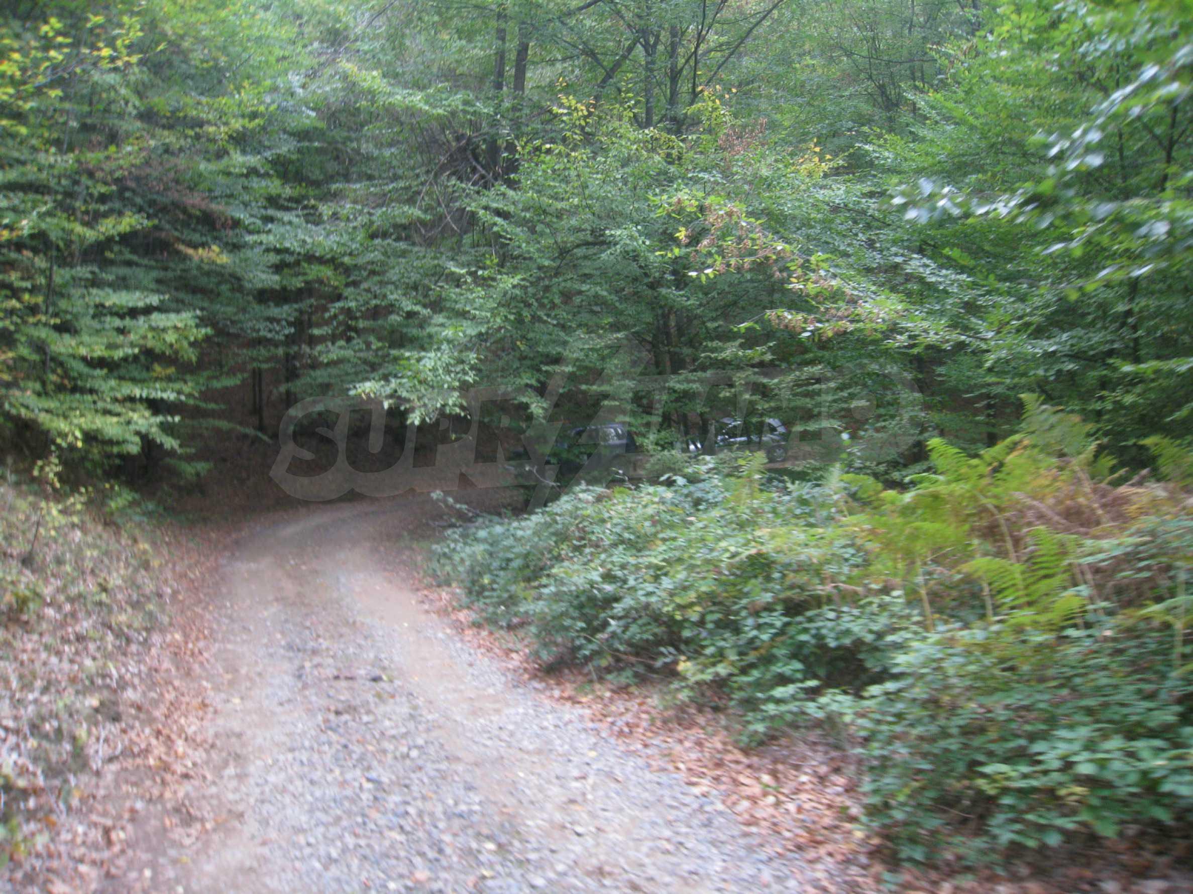 Wald zwischen den Städten Etropole und Pravets 23
