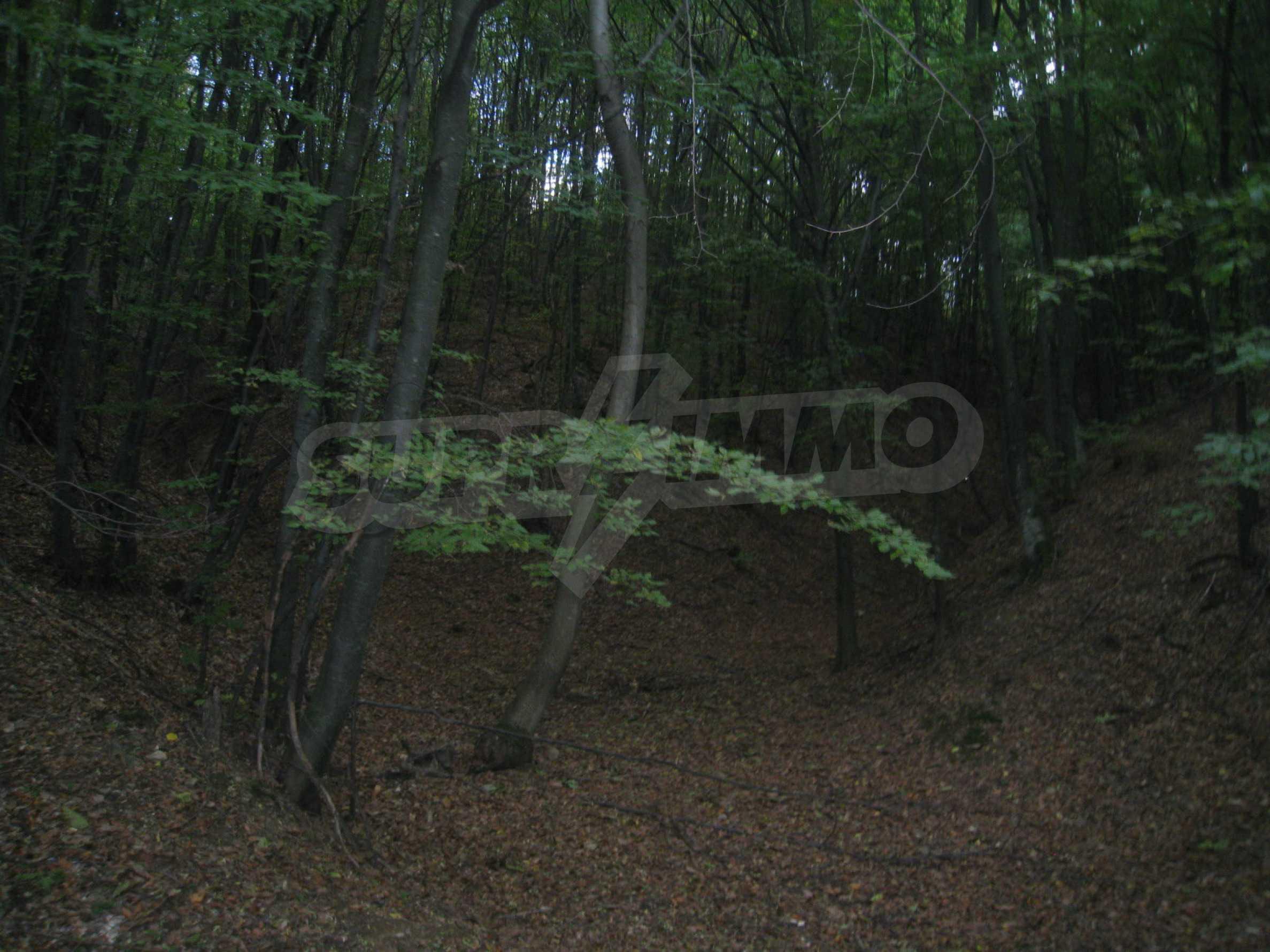 Wald zwischen den Städten Etropole und Pravets 24