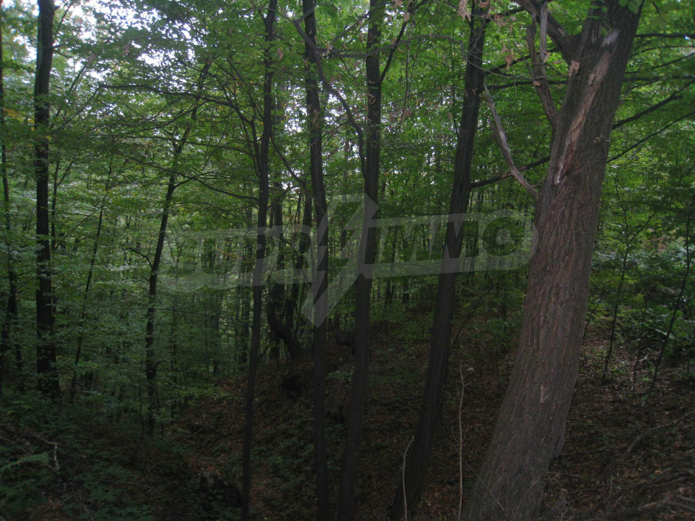 Wald zwischen den Städten Etropole und Pravets 25