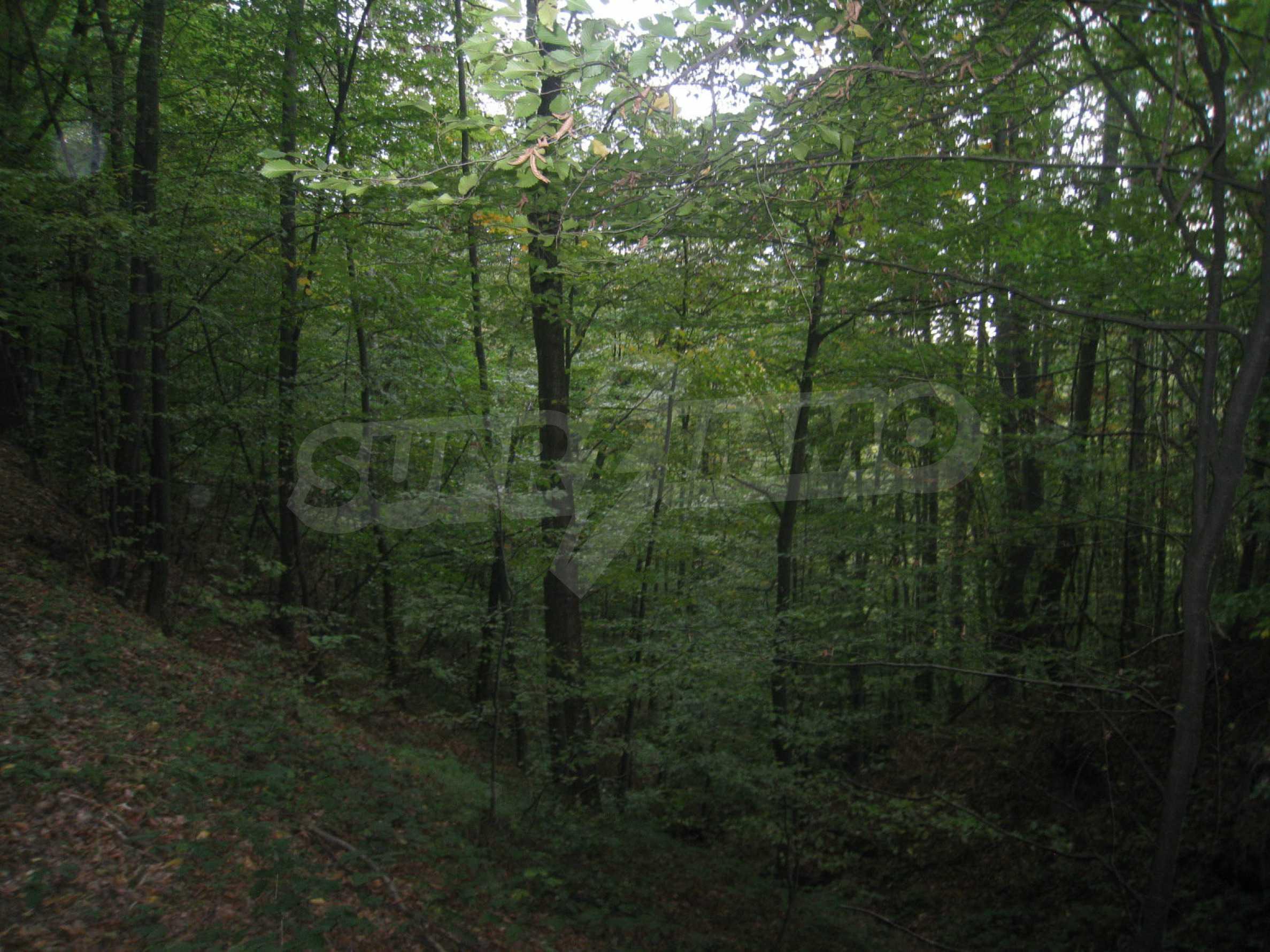 Wald zwischen den Städten Etropole und Pravets 26