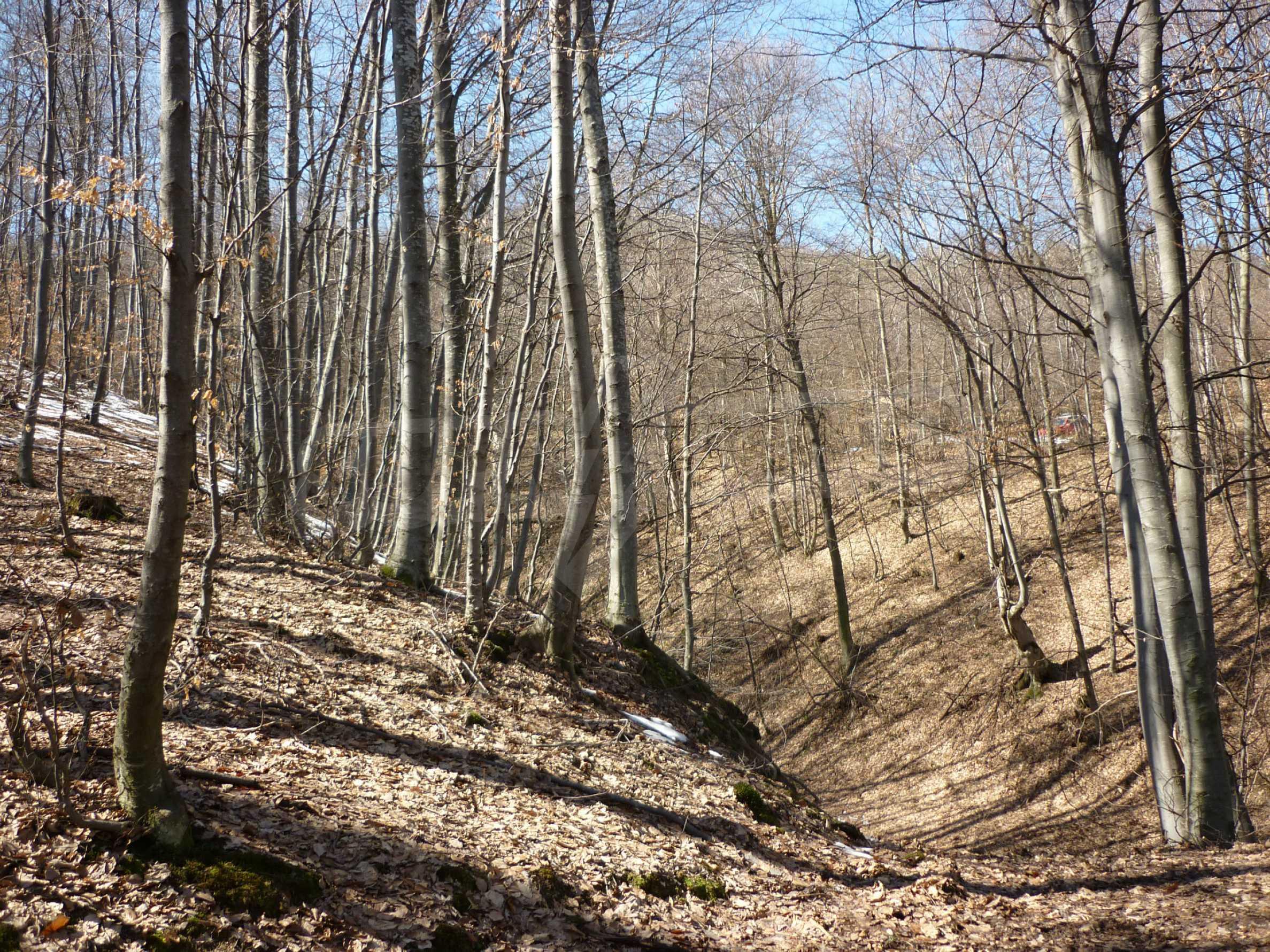 Wald zwischen den Städten Etropole und Pravets 28