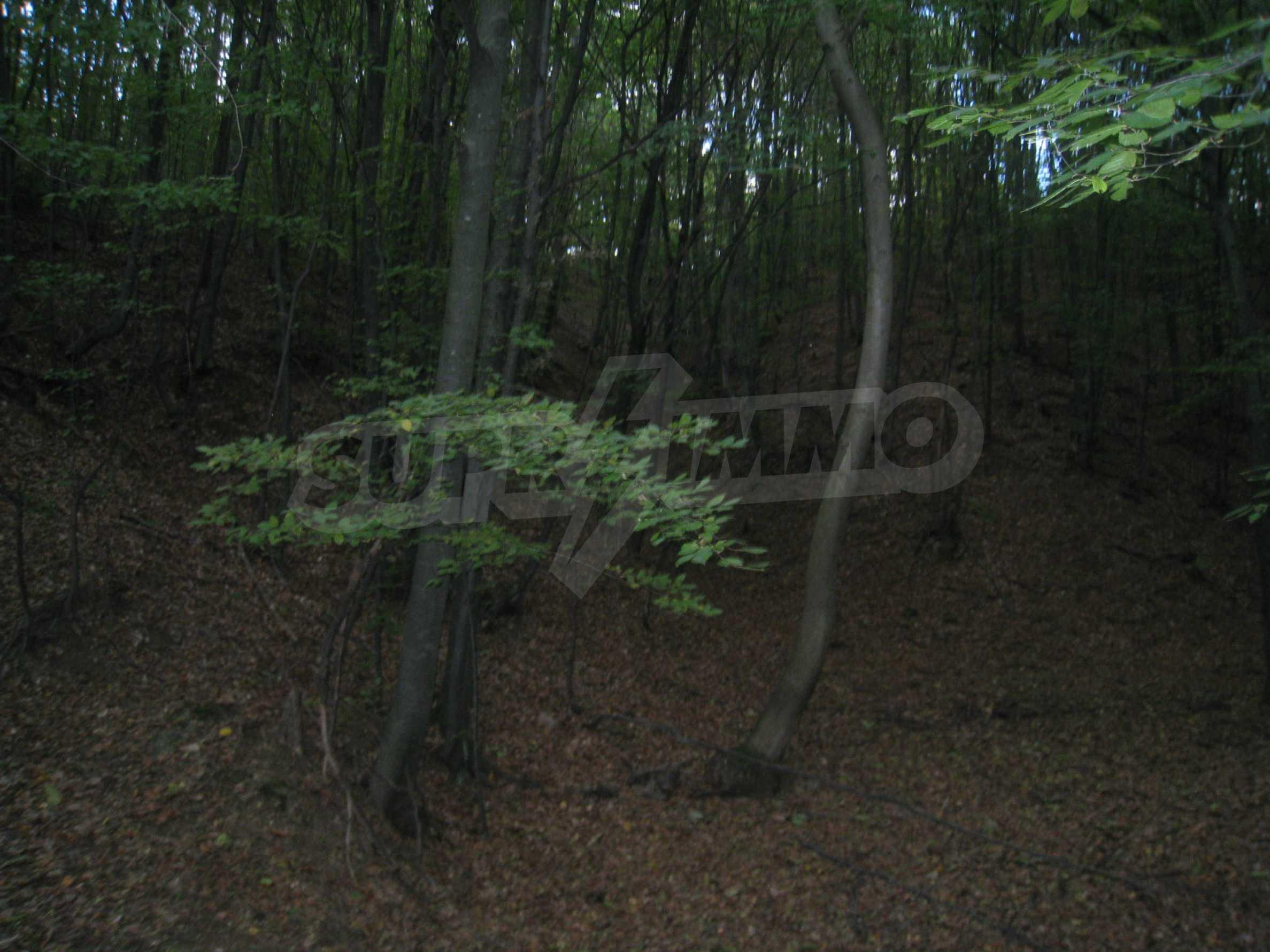 Wald zwischen den Städten Etropole und Pravets 2