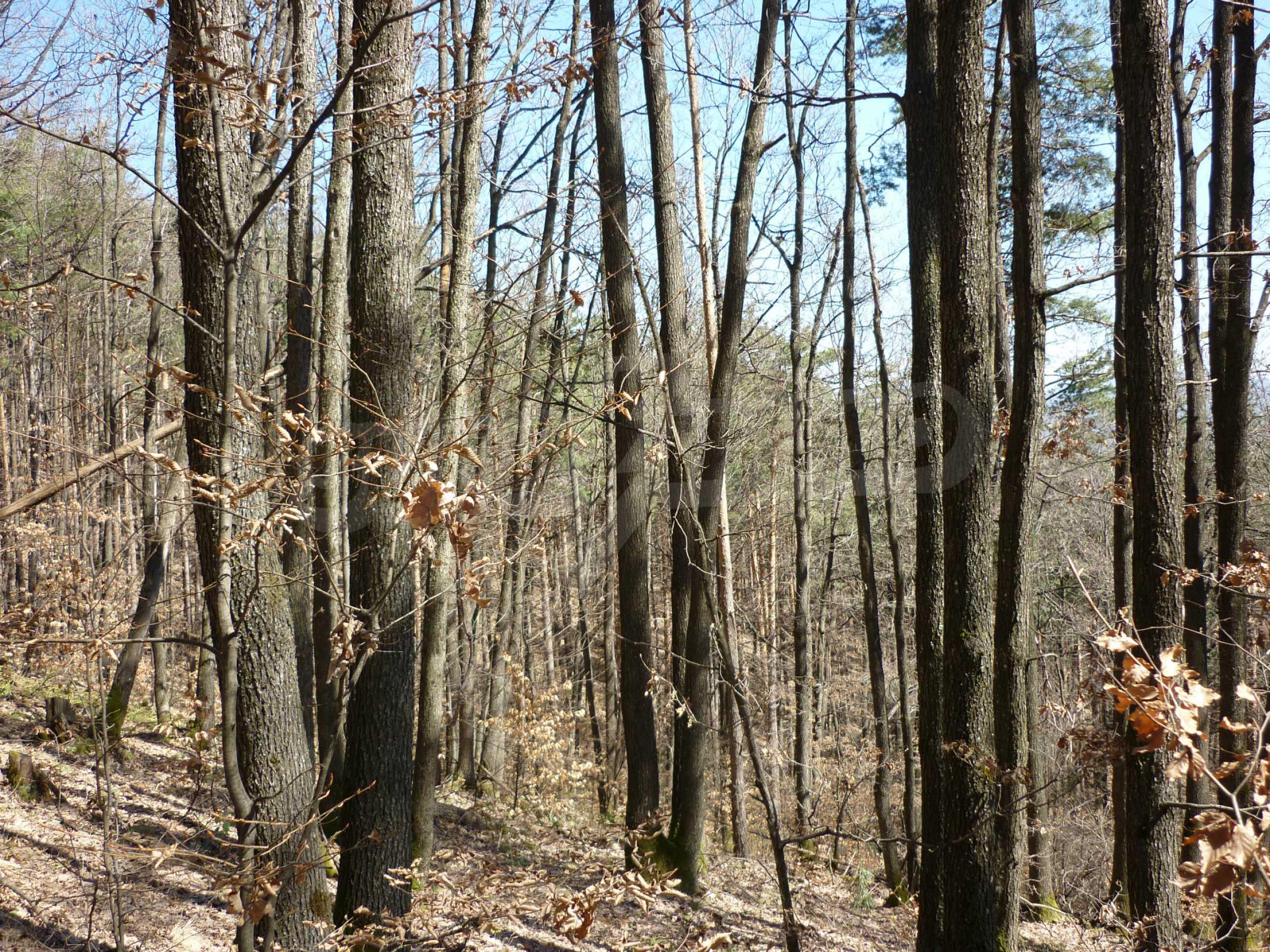 Wald zwischen den Städten Etropole und Pravets 29