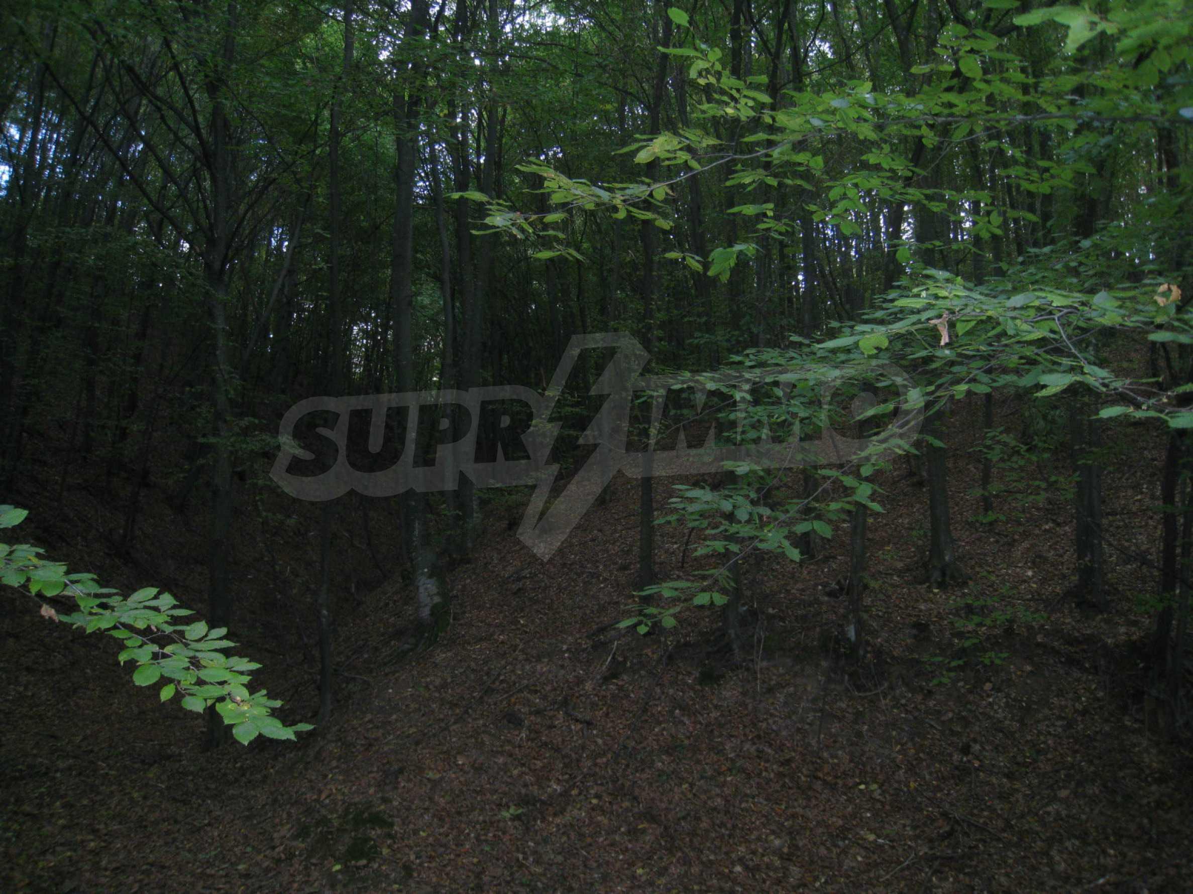 Wald zwischen den Städten Etropole und Pravets 4