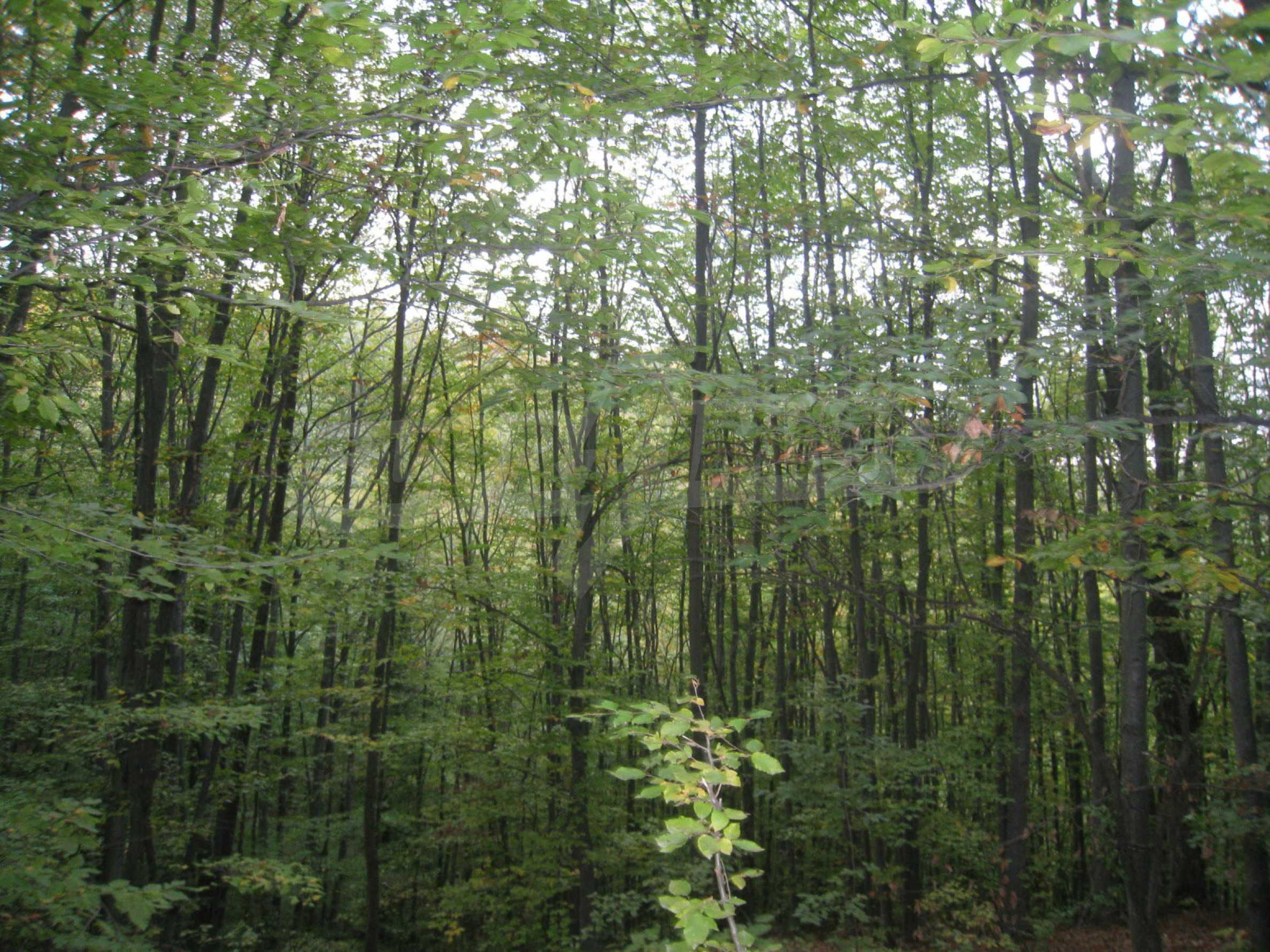 Wald zwischen den Städten Etropole und Pravets 7