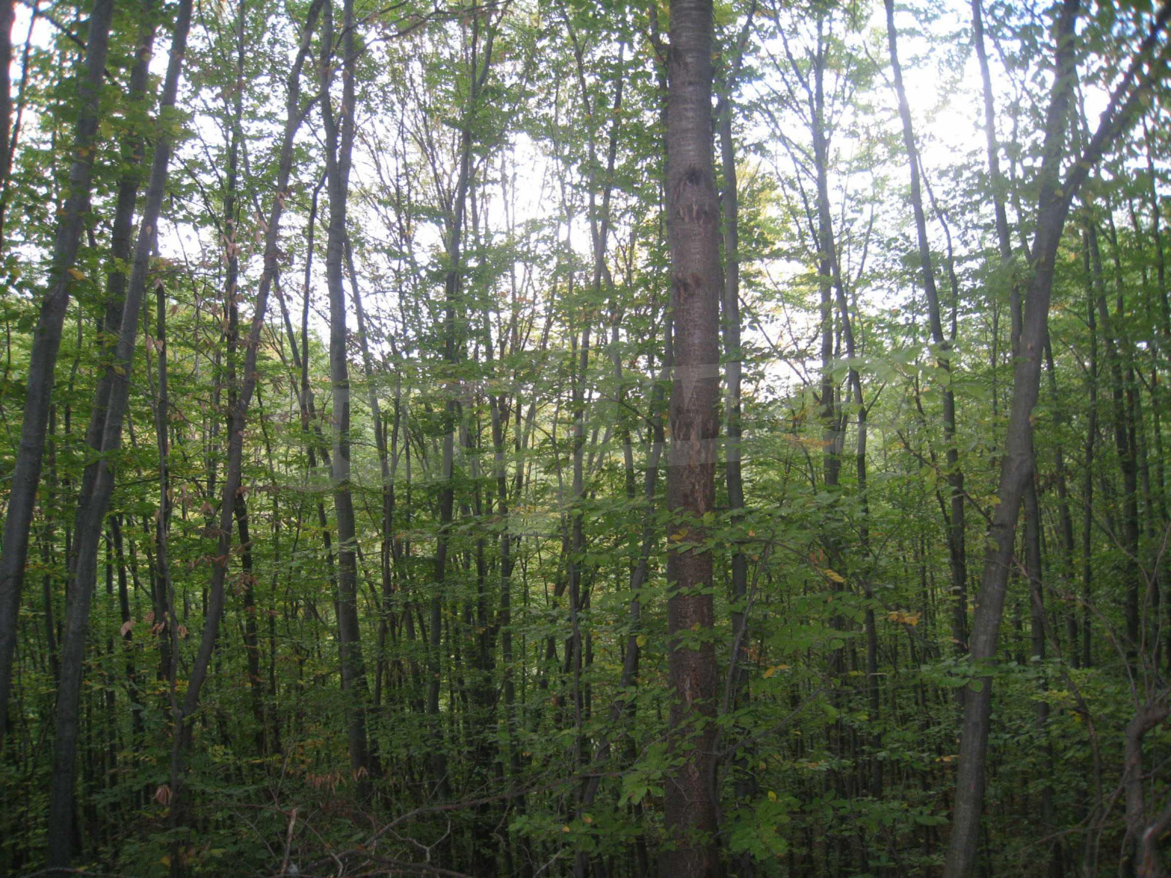 Wald zwischen den Städten Etropole und Pravets 8