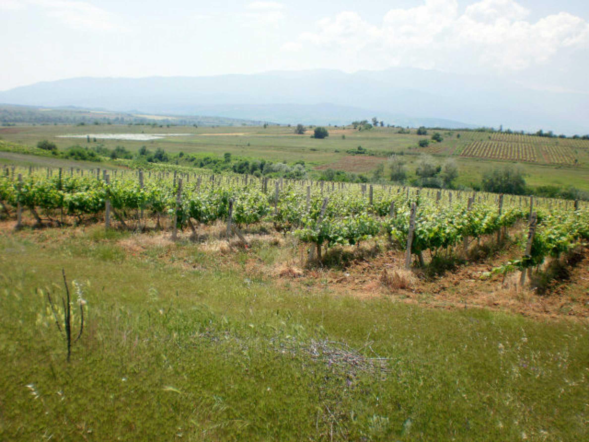 Agricultural land for sale near Sandanski