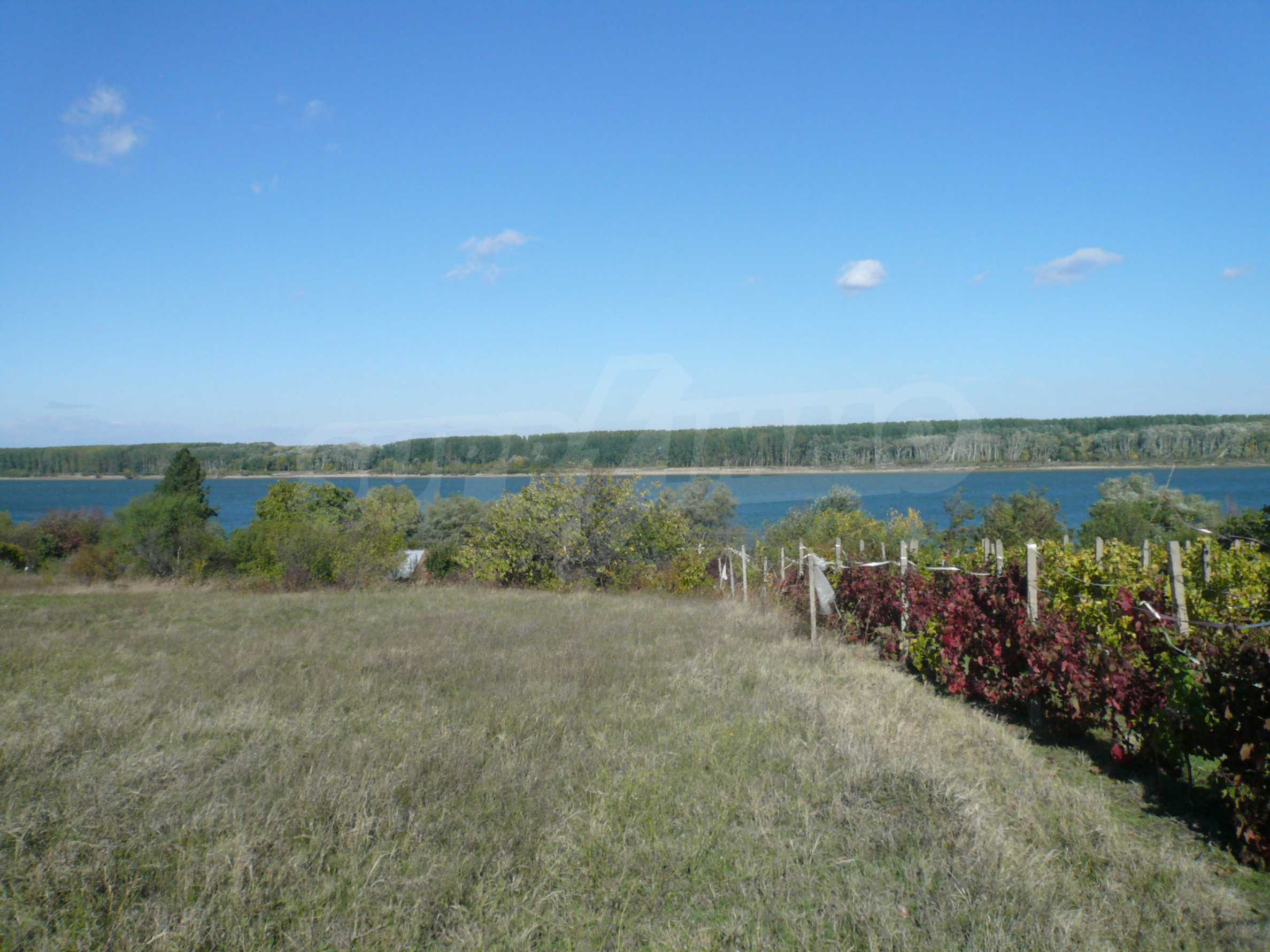 Regulated plot of land with vineyard at the banks of the Danube