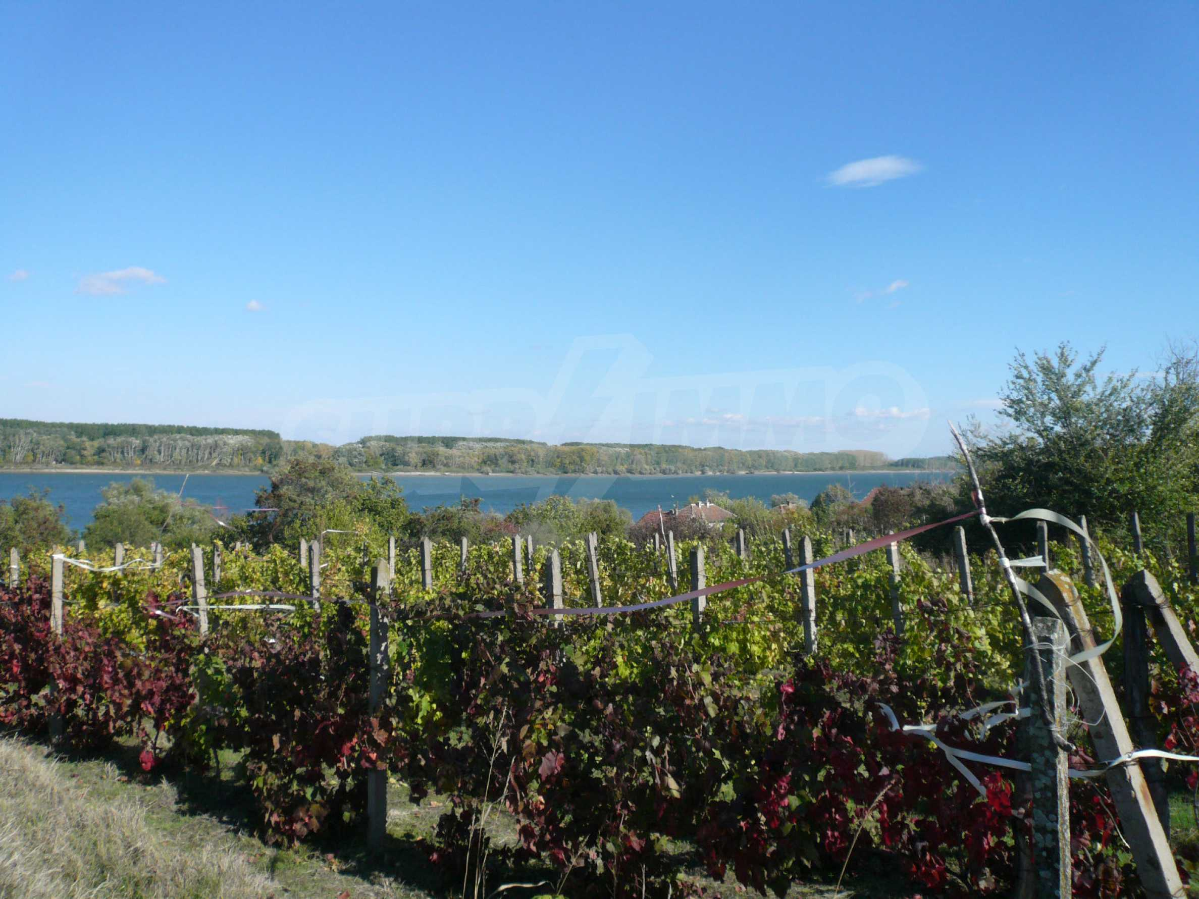 Regulated plot of land with vineyard at the banks of the Danube 2