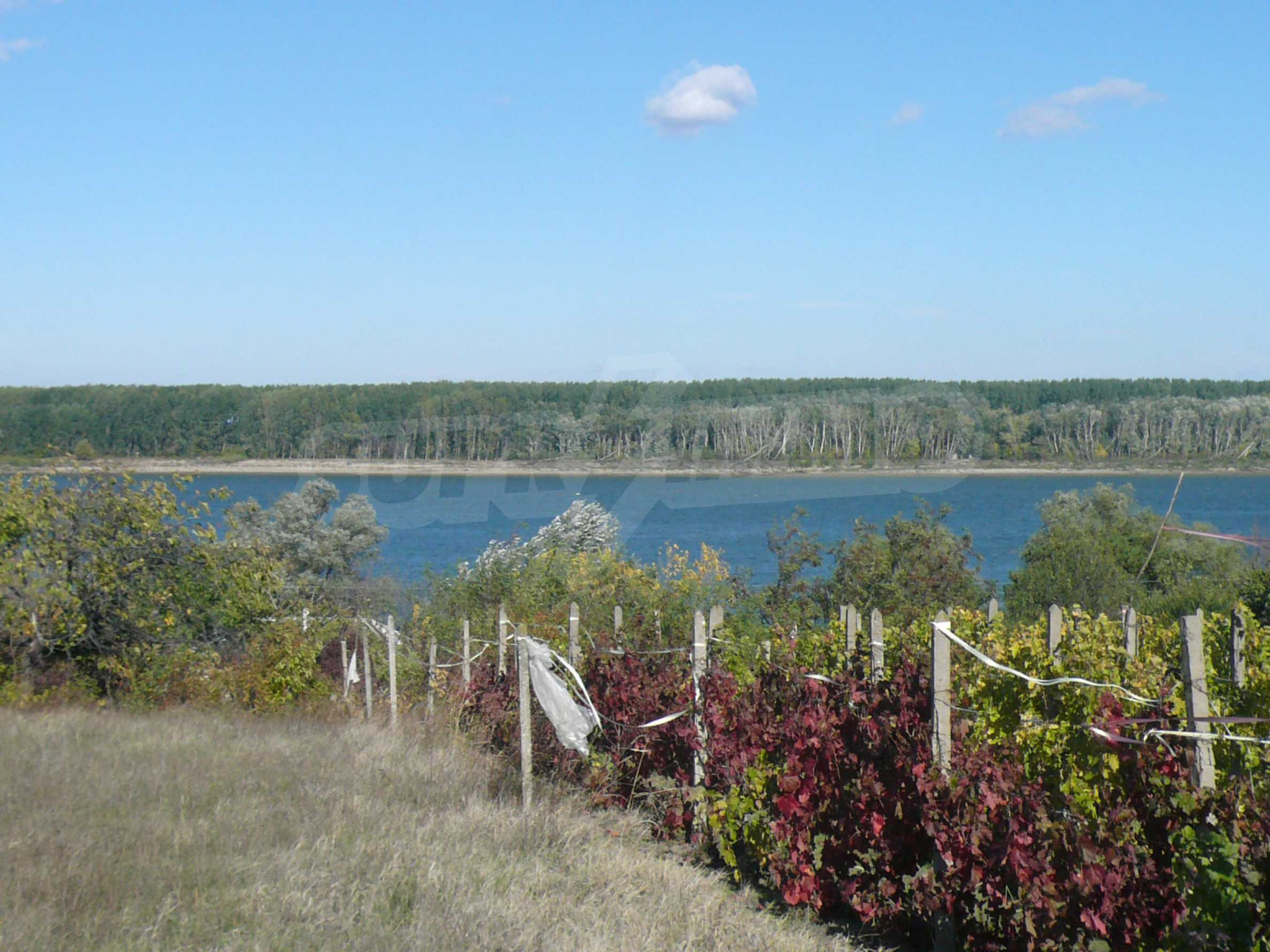 Regulated plot of land with vineyard at the banks of the Danube 3