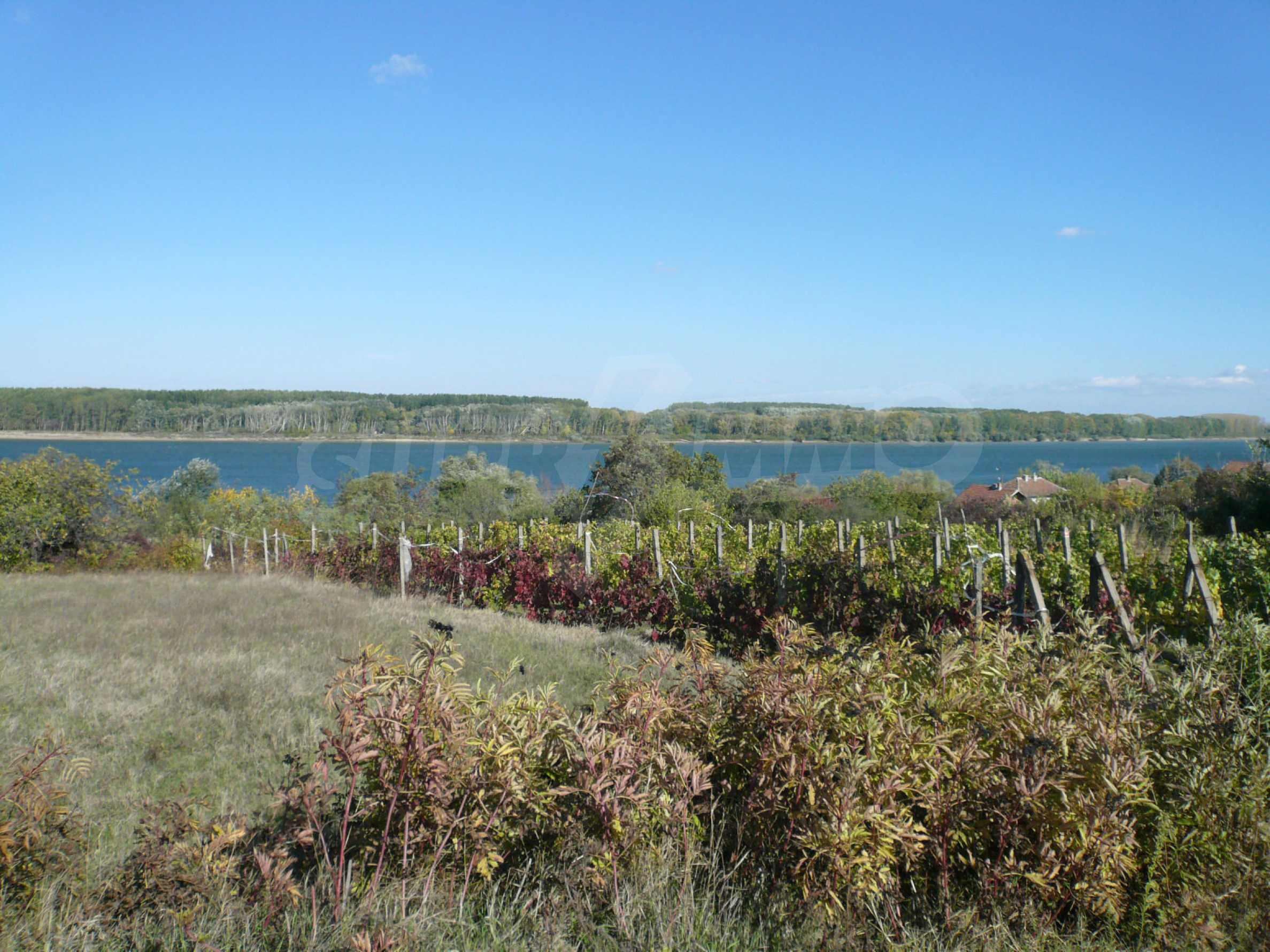 Regulated plot of land with vineyard at the banks of the Danube 6