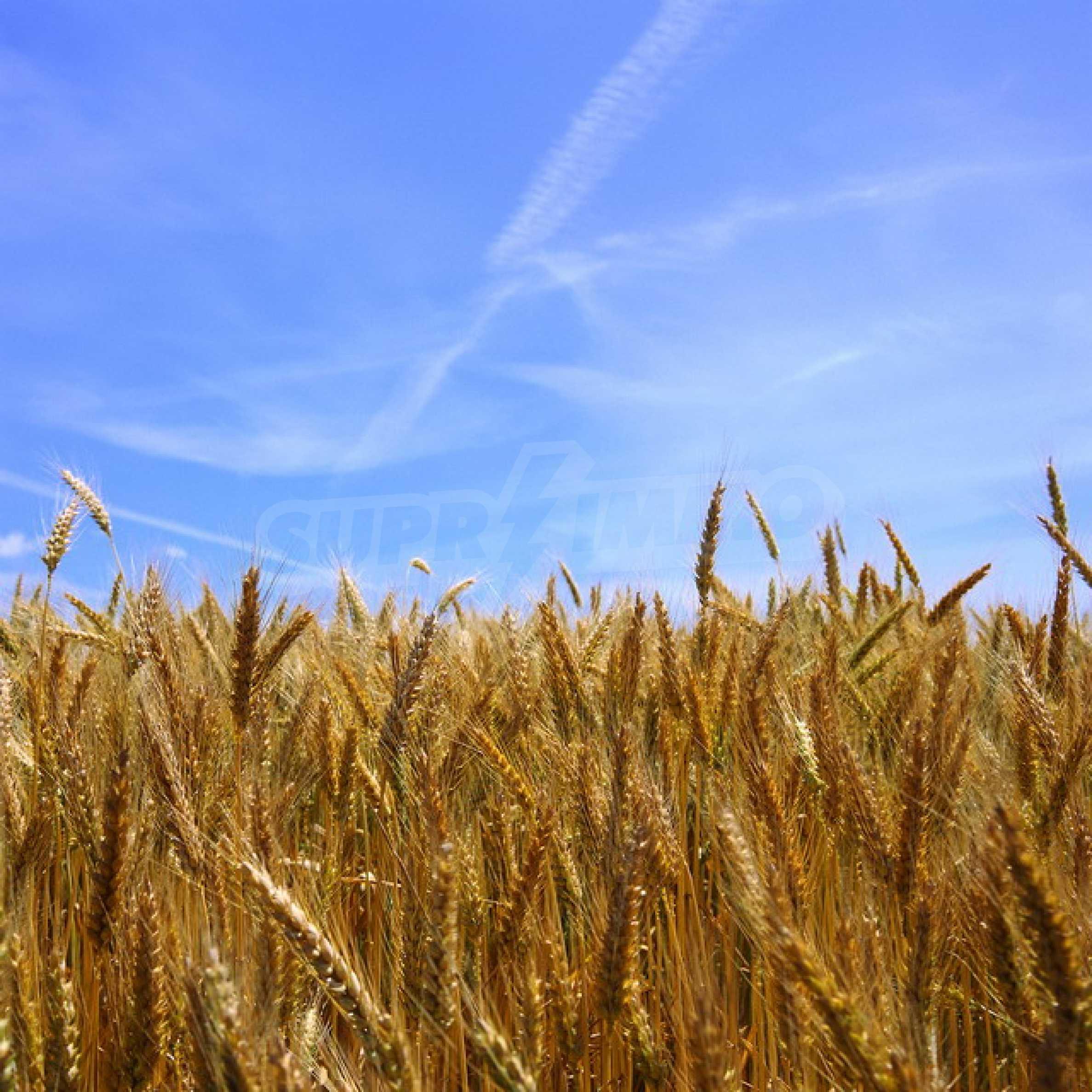 Agricultural land near Dryanovo