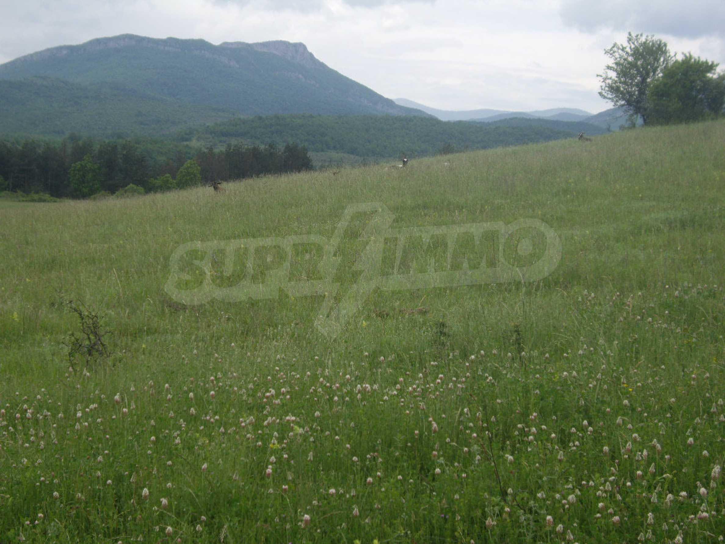 Großes unreguliertes Grundstück 50 km von Vidin entfernt 11