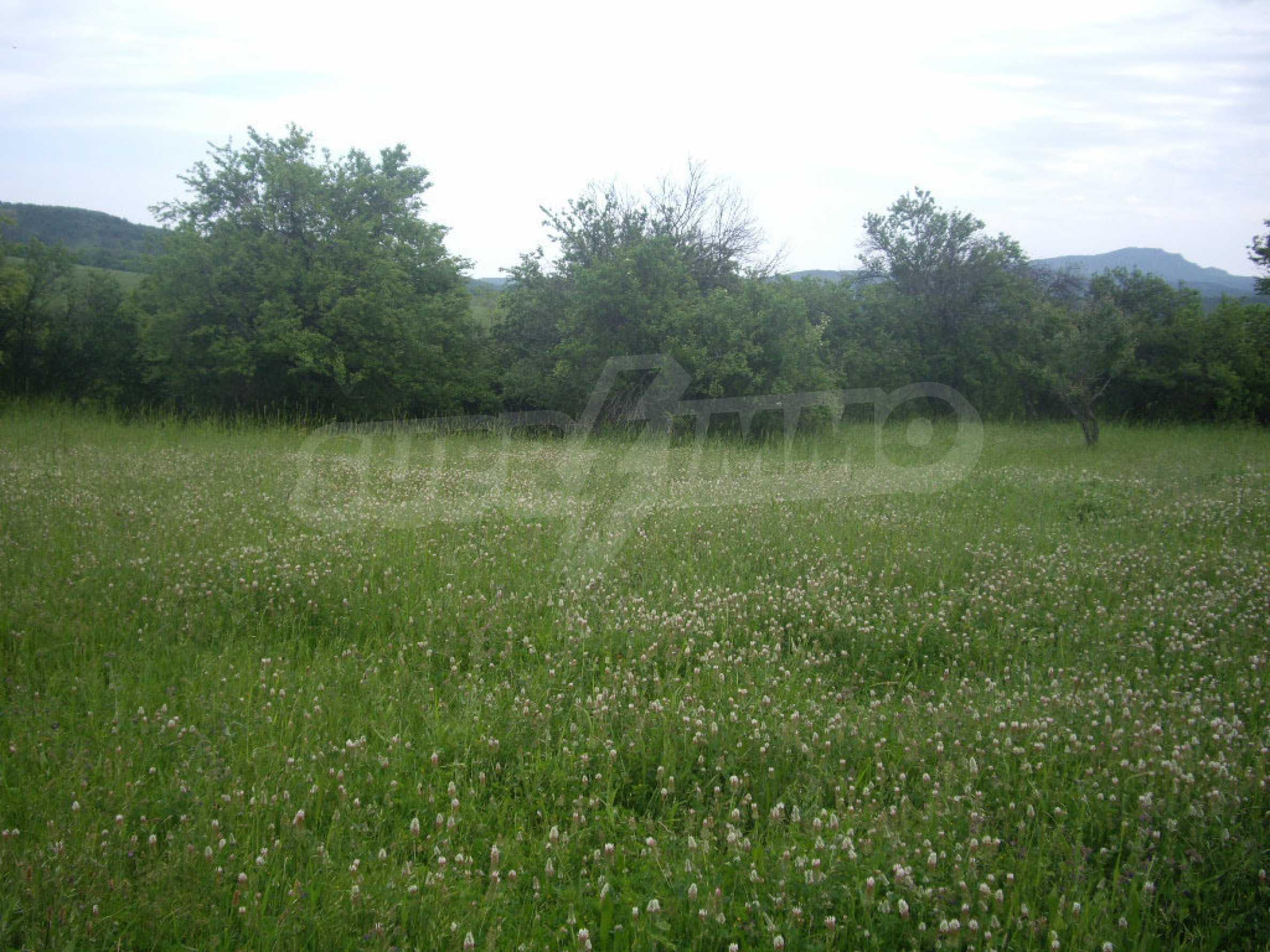 Großes unreguliertes Grundstück 50 km von Vidin entfernt 12