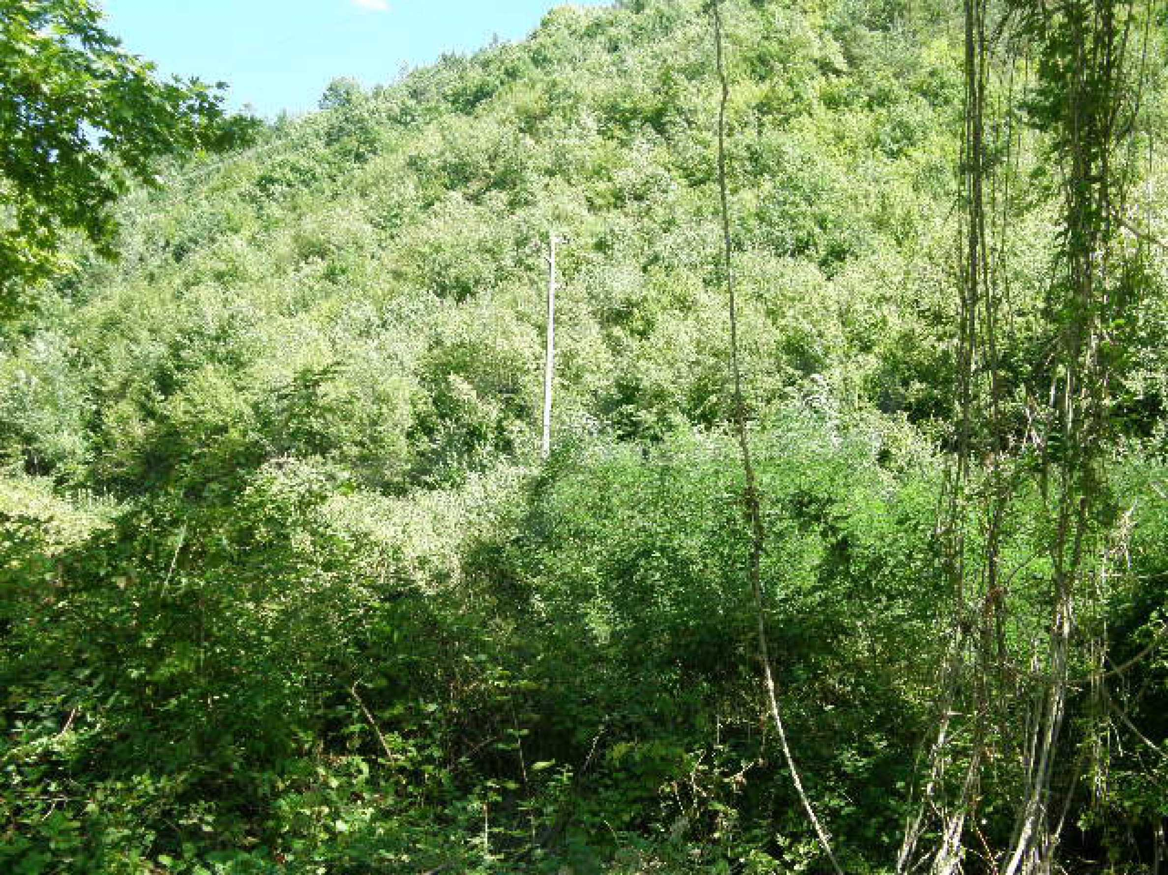 Bauland für ein Feriendorf in der Nähe von Sandanski 1