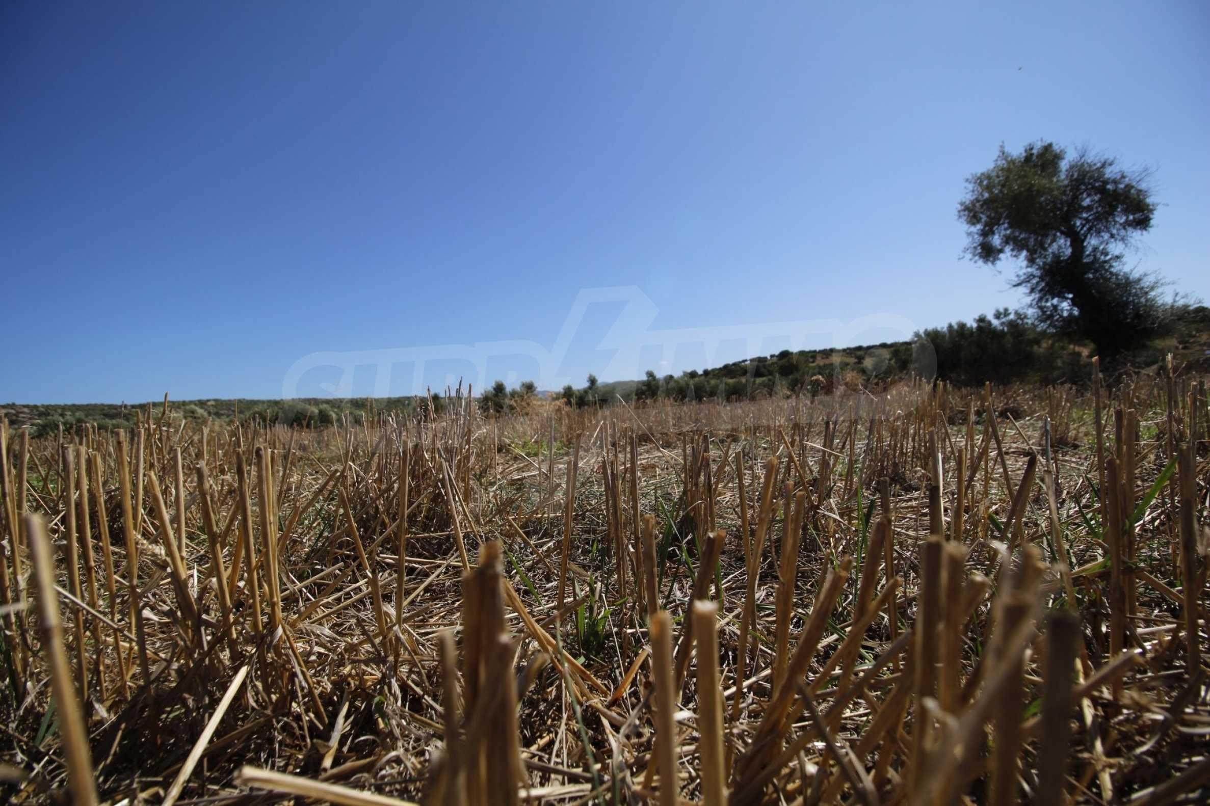 Земеделска земя  в  Никити 18