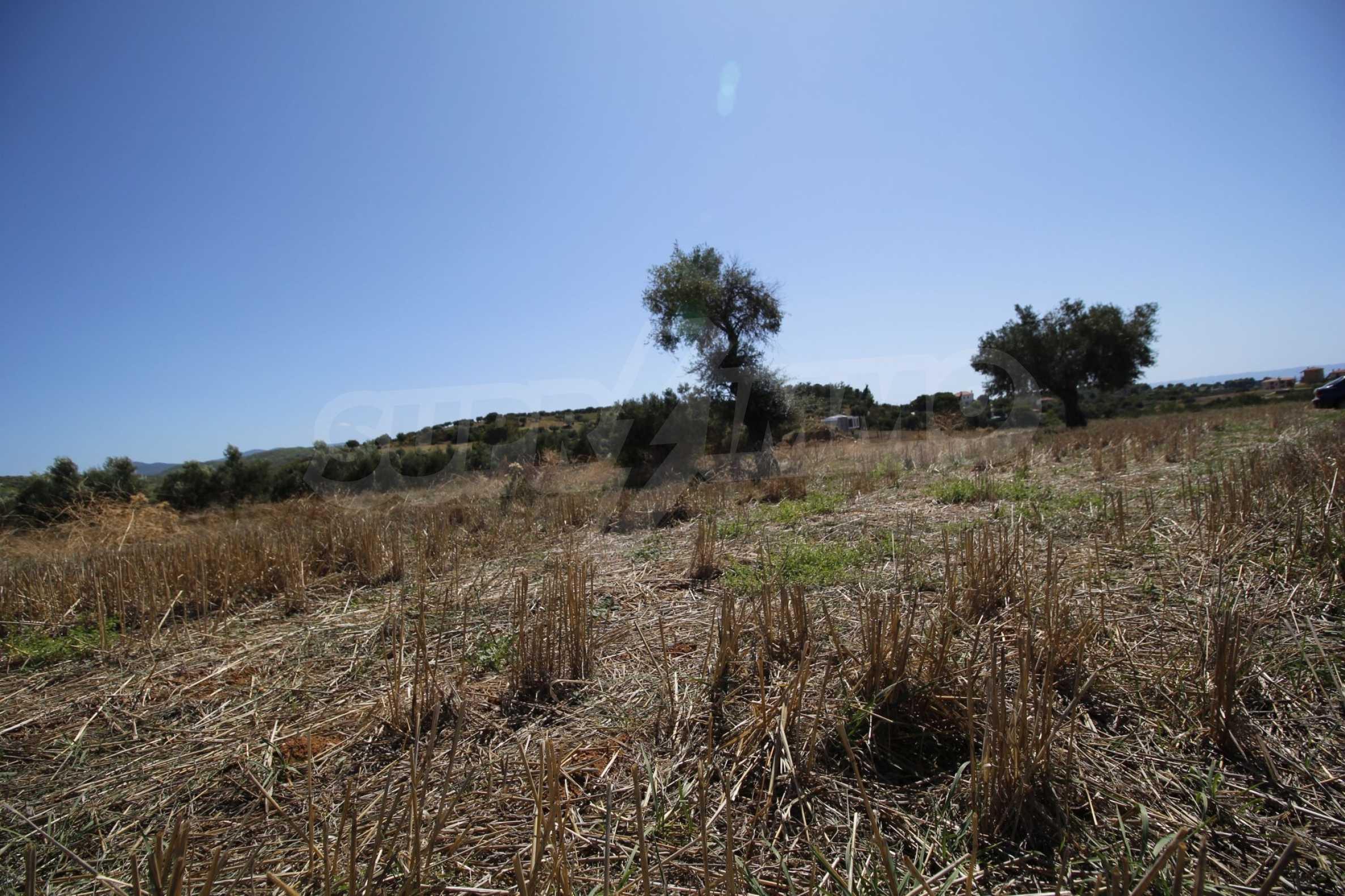 Земеделска земя  в  Никити 19