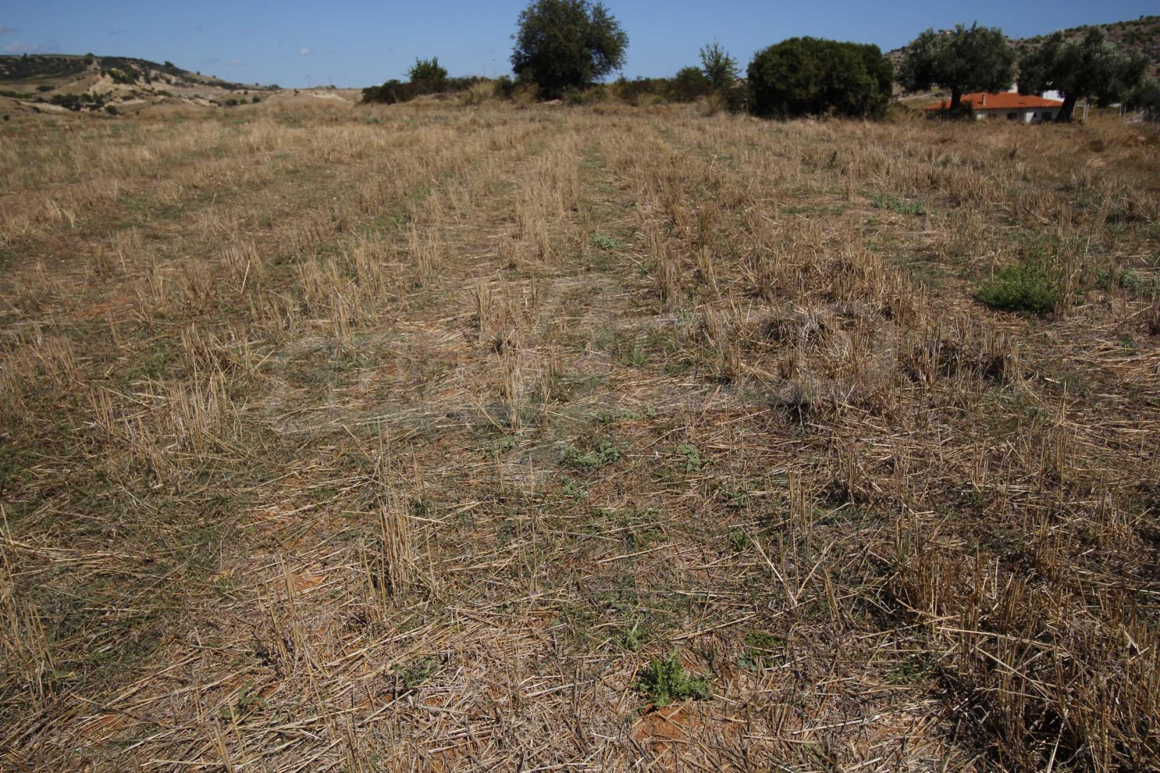 Земеделска земя  в  Никити 24