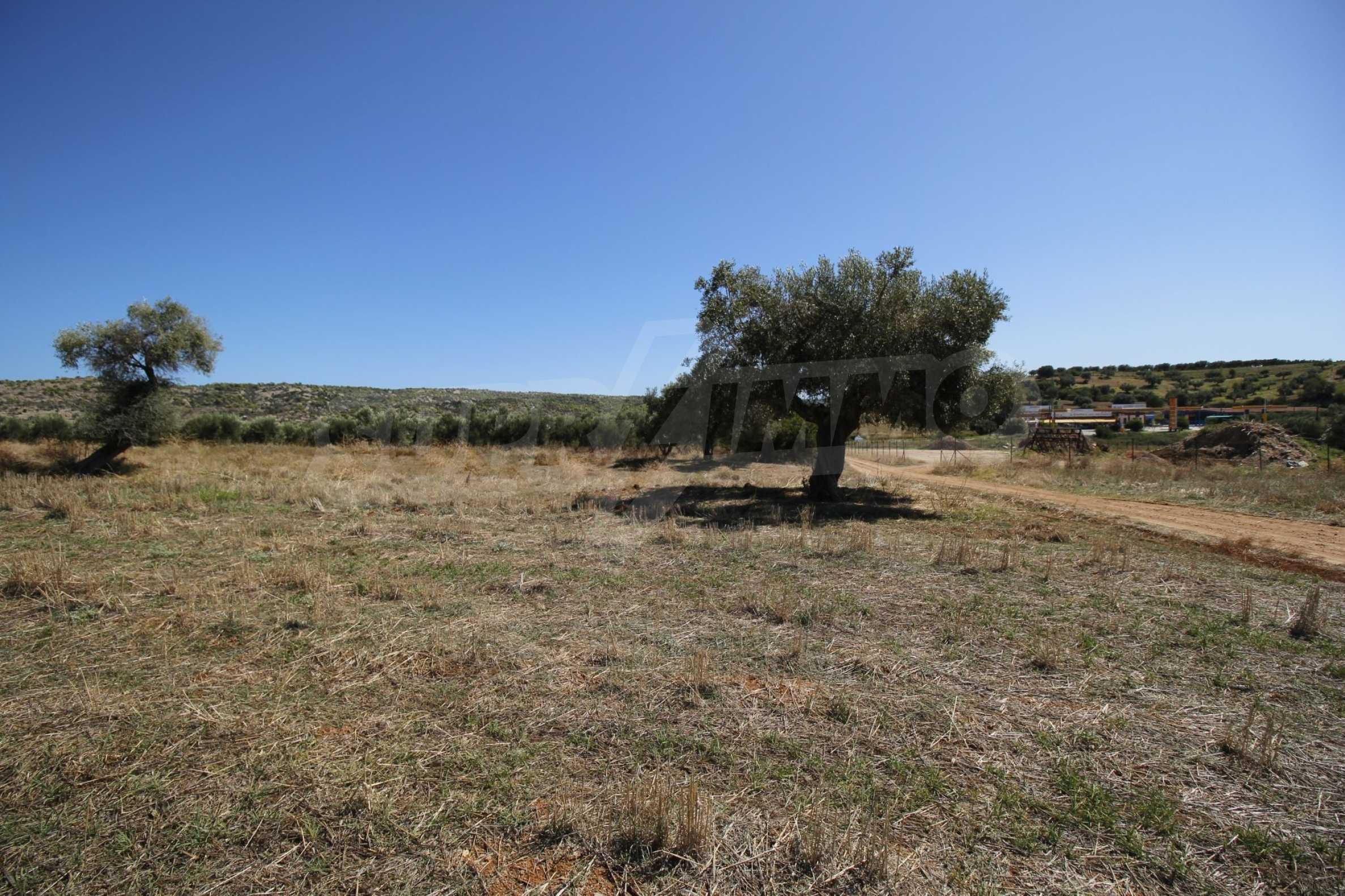 Земеделска земя  в  Никити 6