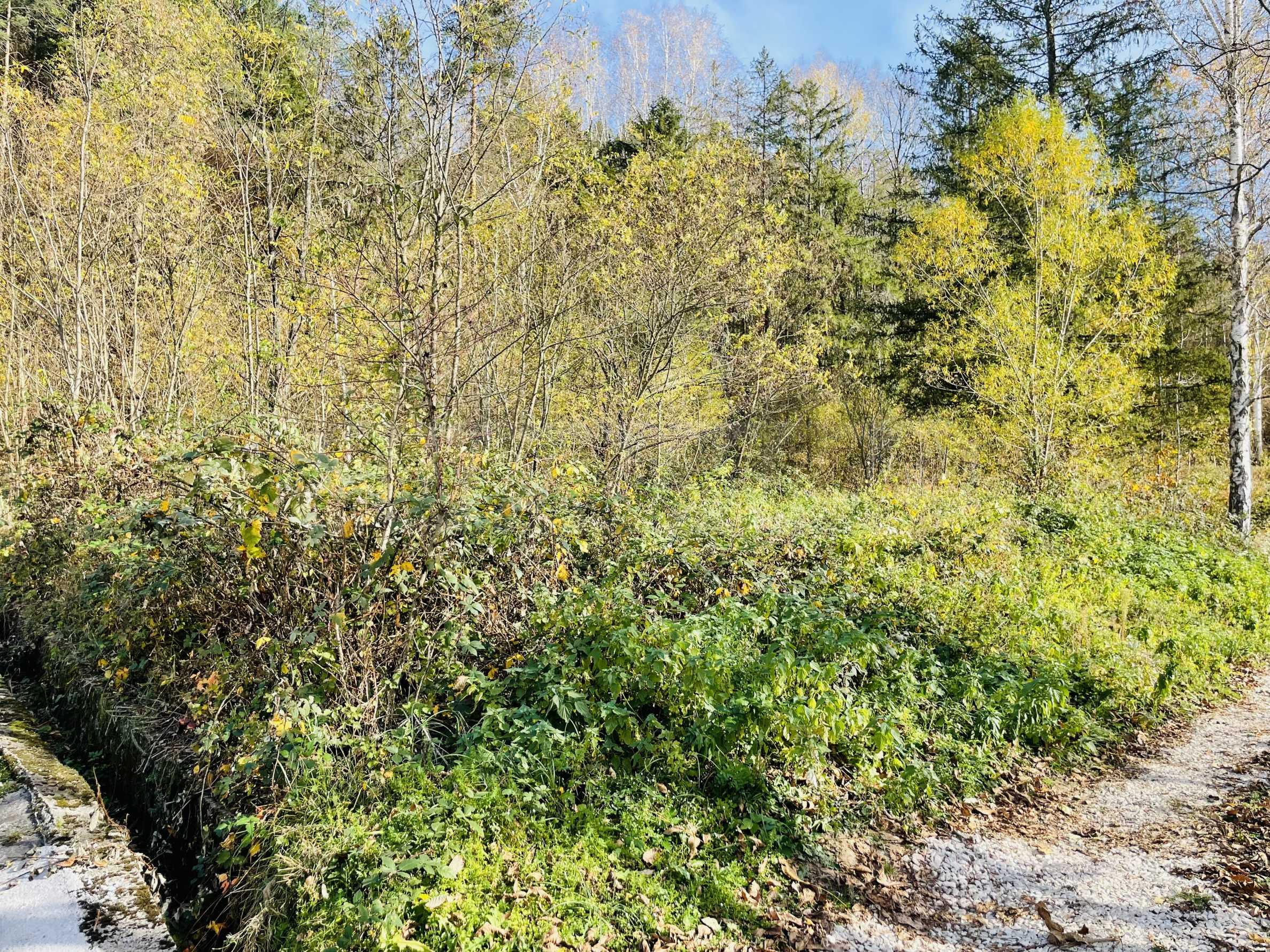 Geregeltes Grundstück mit Baugenehmigung im Dorf Ribaritsa 2